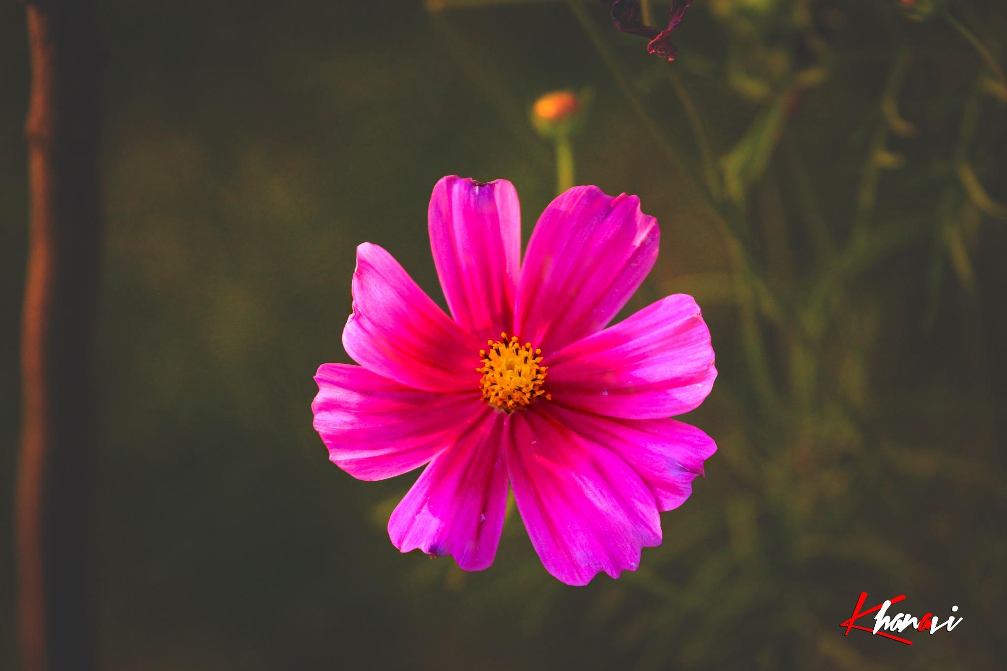 Flower by Khan Avi