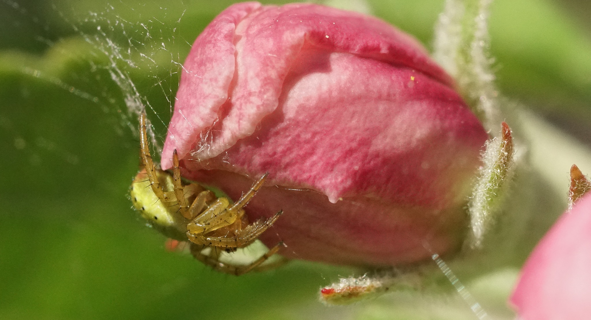green spider by WhiskyGraphen