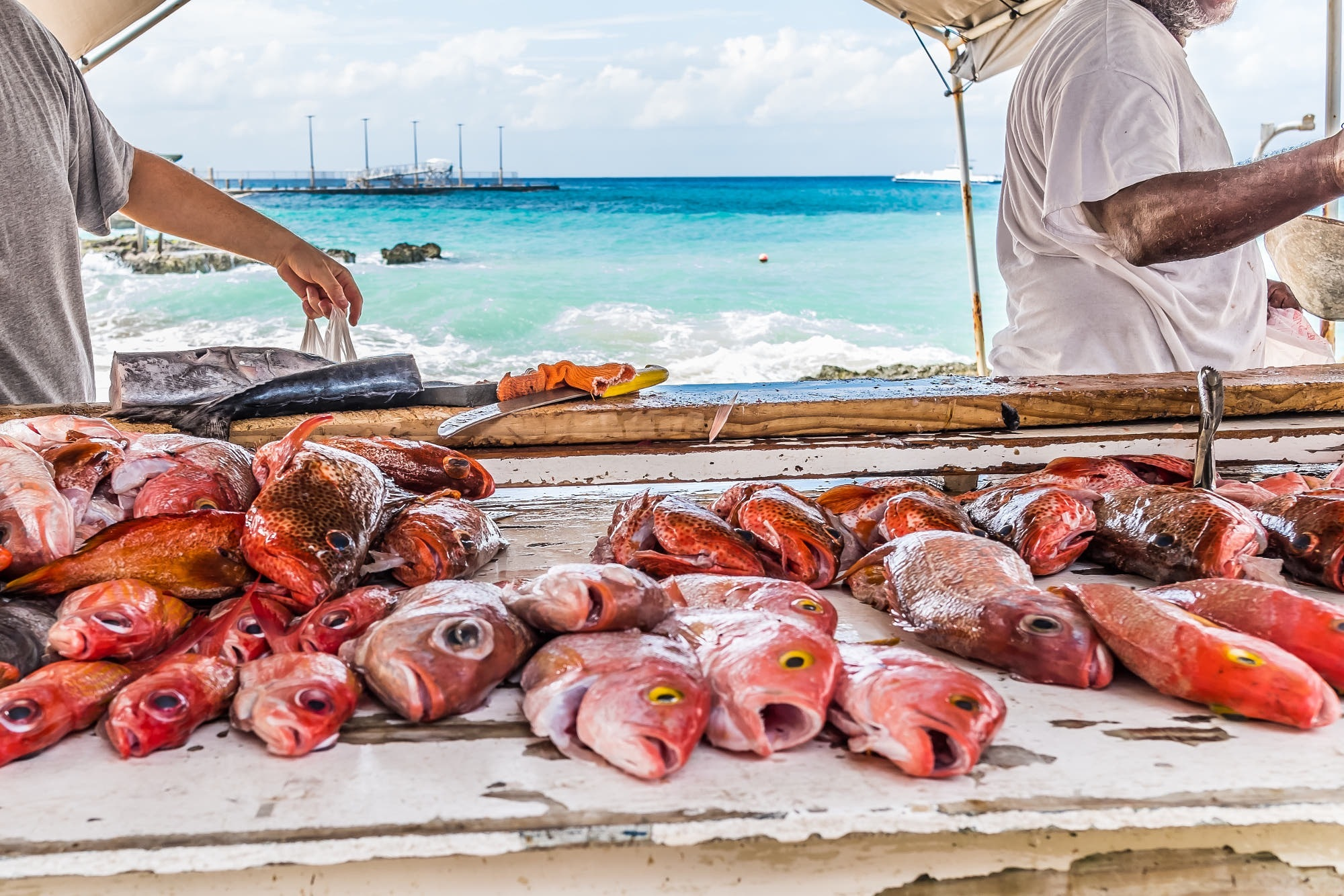 Cayman Fishmarket by WhiskyGraphen