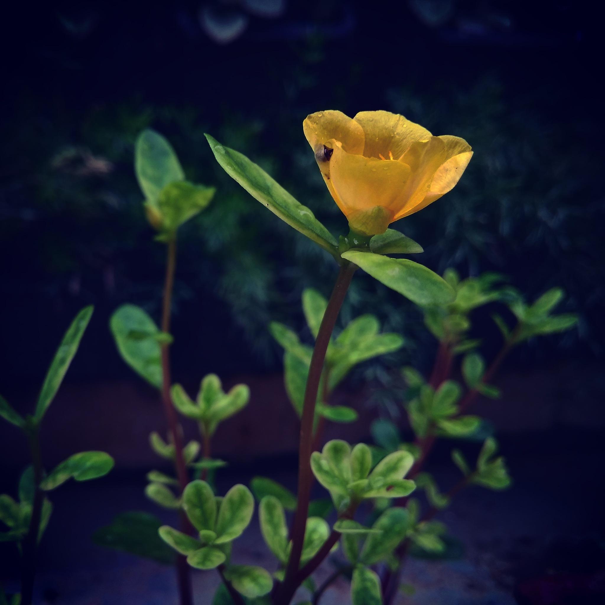 Yellow love by Awantika
