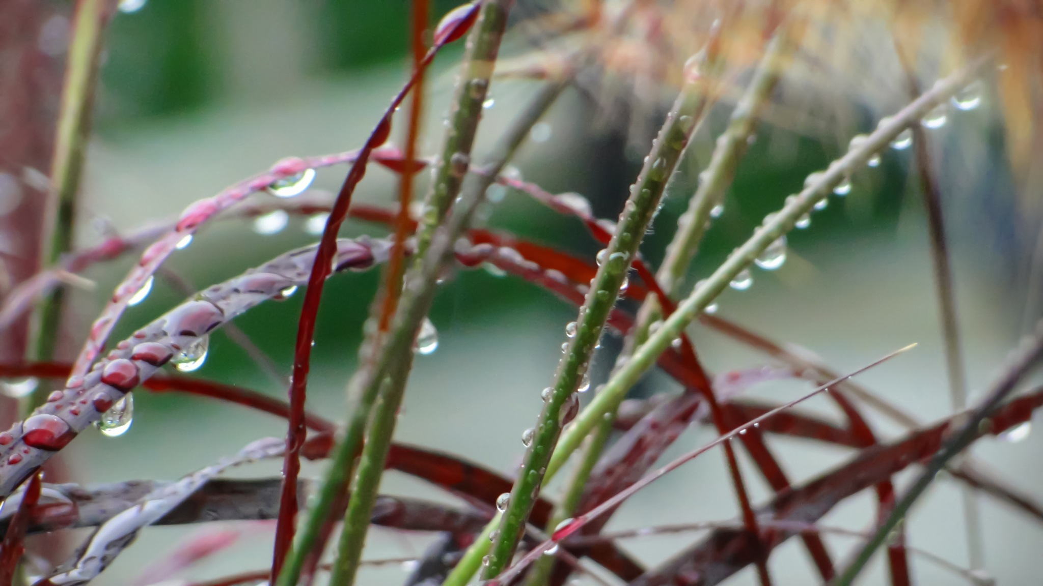 Backyard Flora by Ariane Dufort