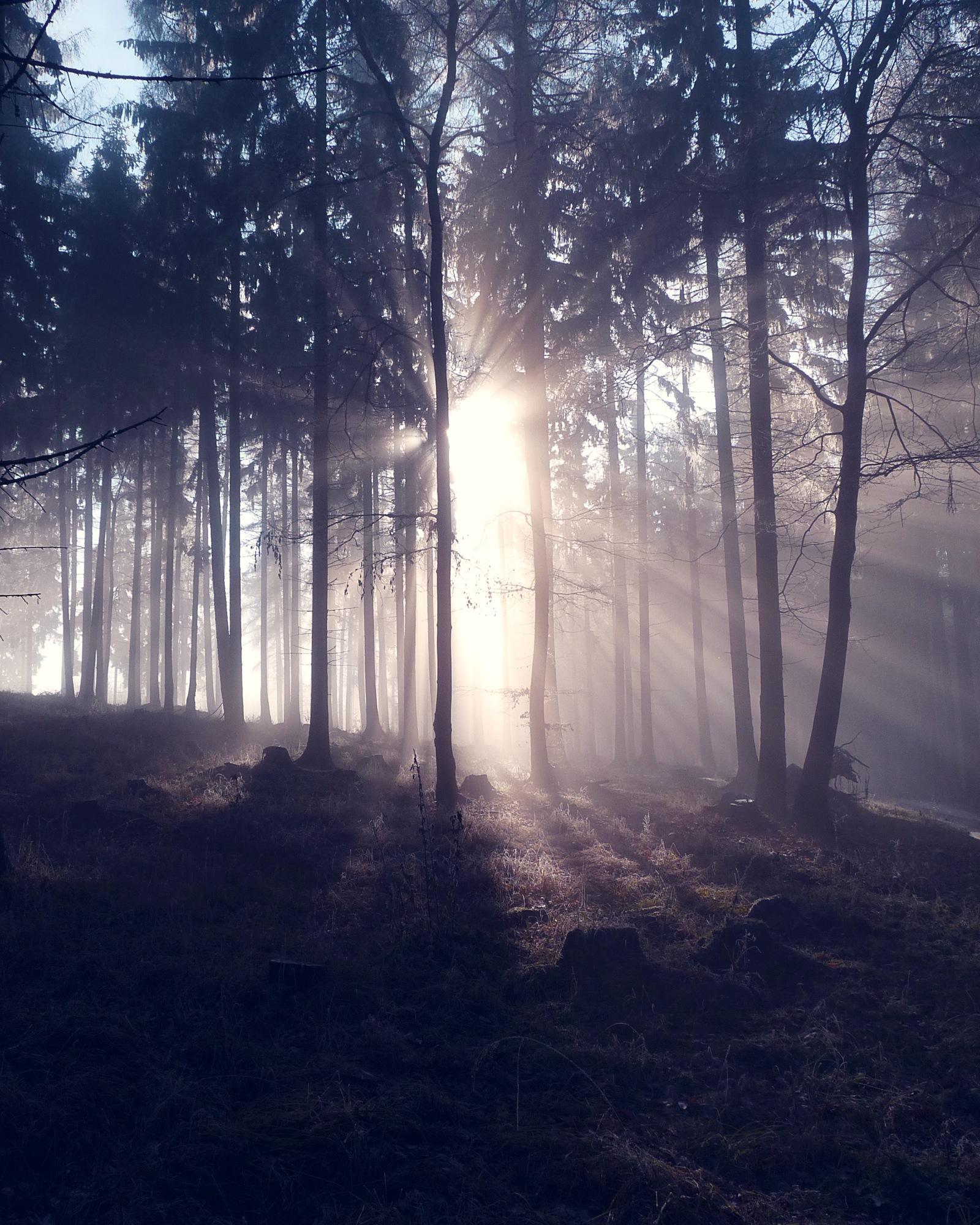 A Foggy Day II by Jaroslav Vosáhlo