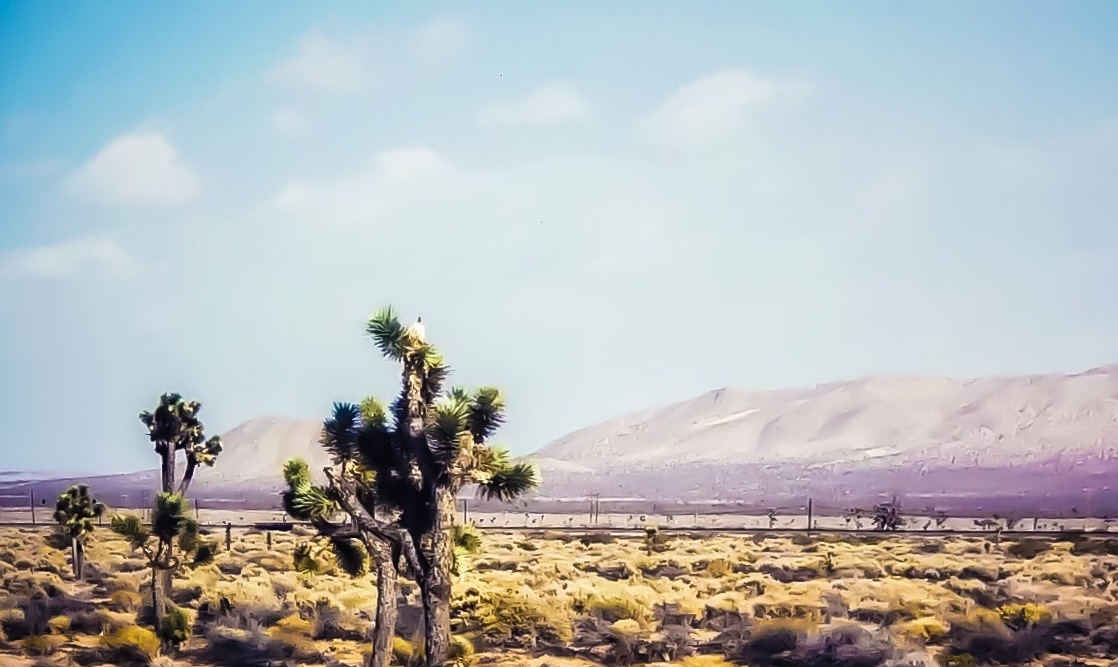 Mojave Summer by Justin hunter