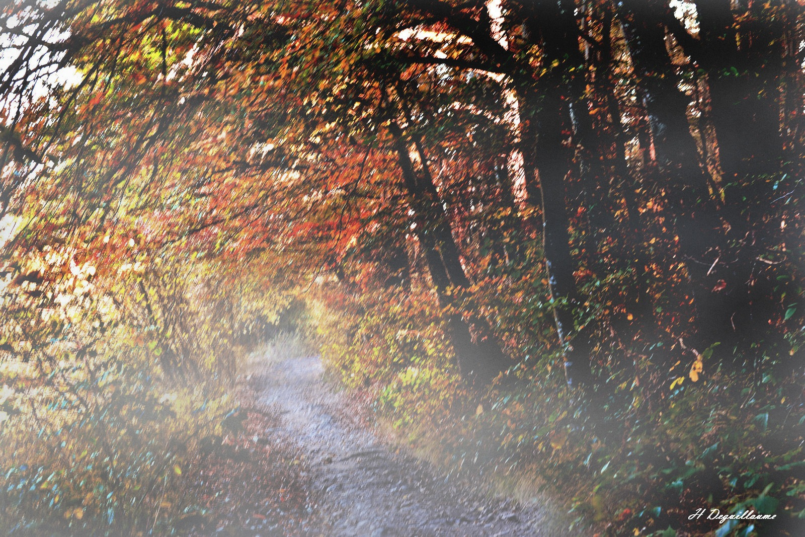 Couleurs d'automne by henridge
