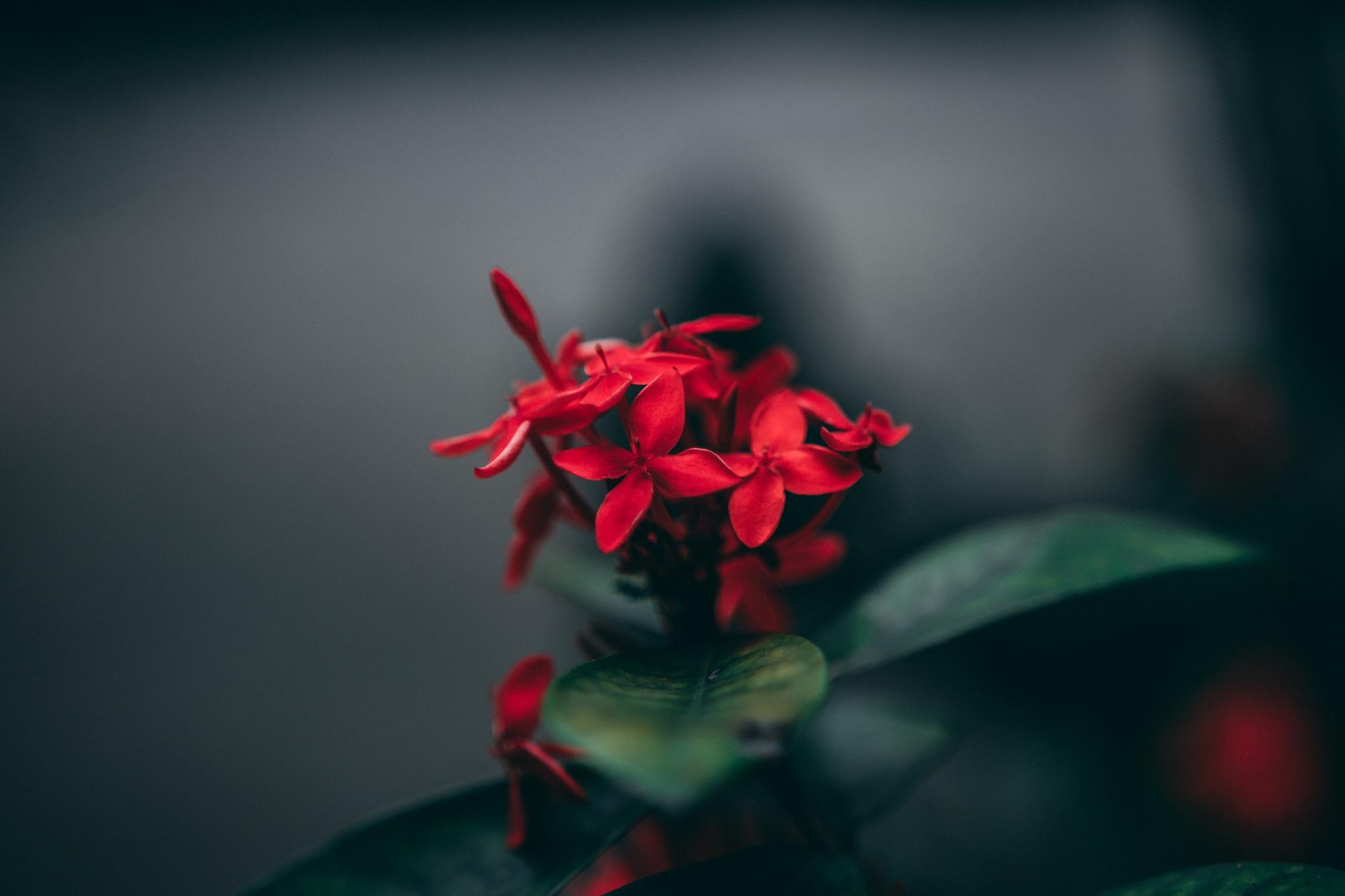Red Crush by Zhu Hongzhi