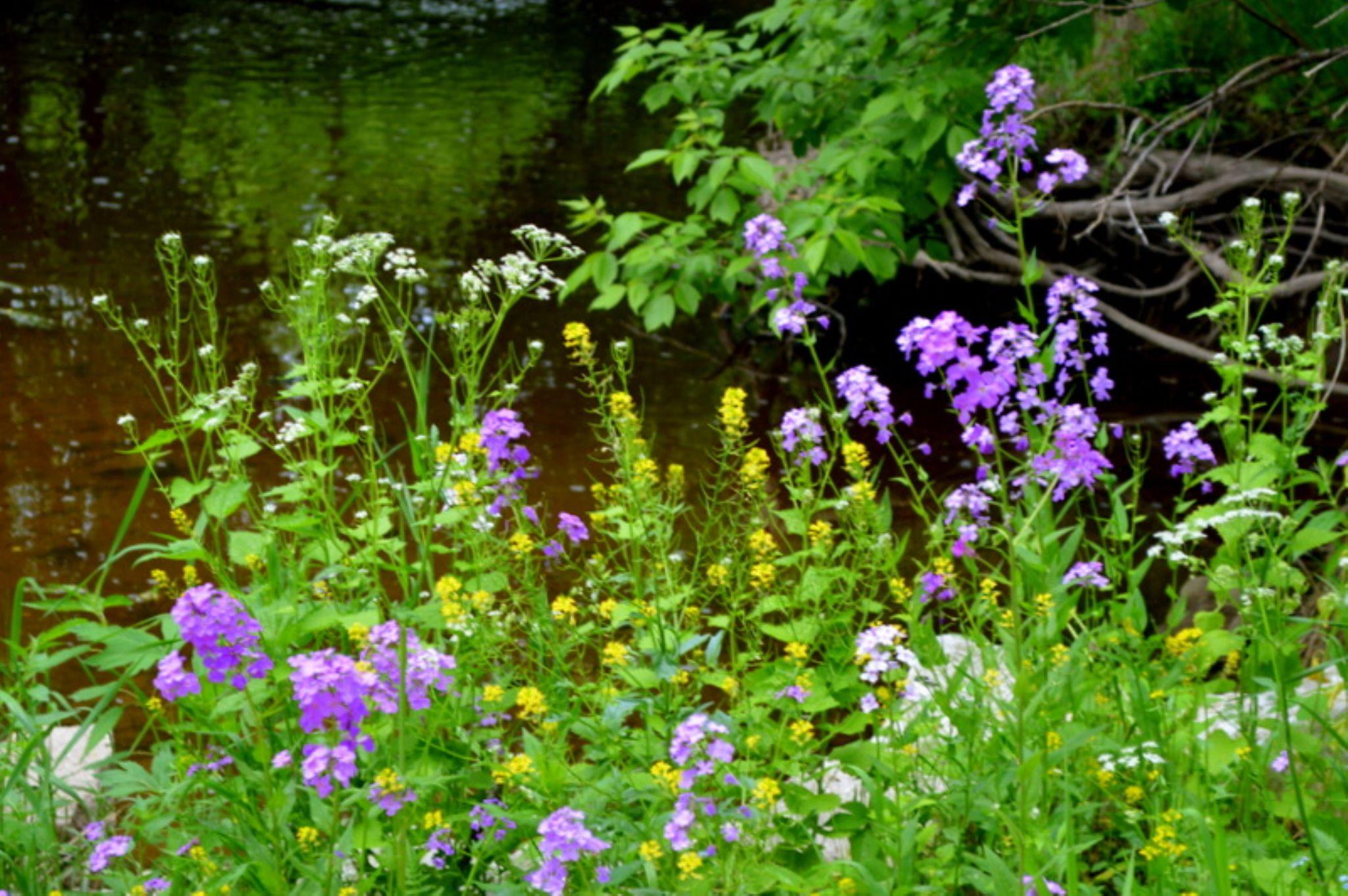 wild flowers by Karen Mayer