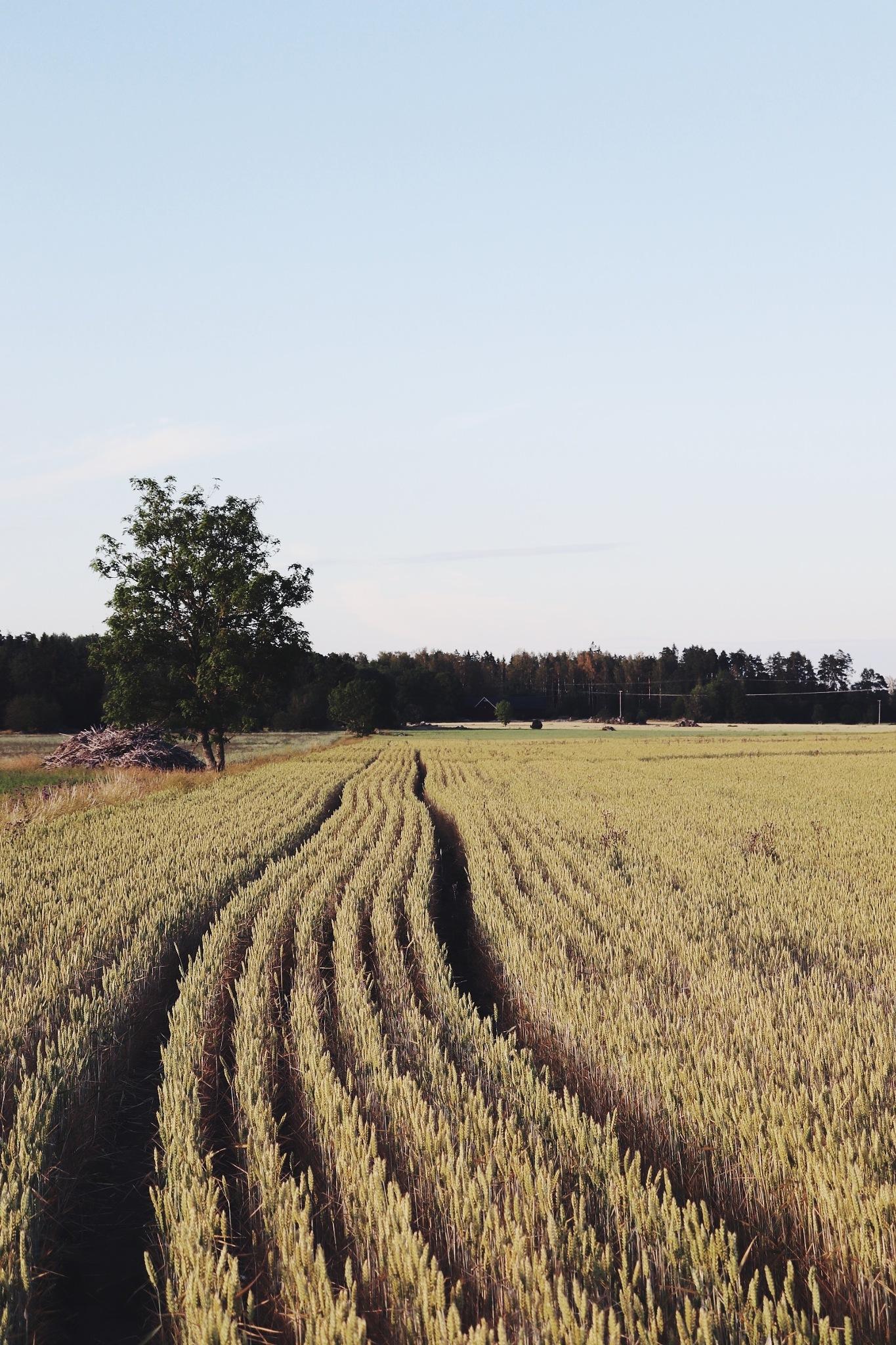 Fieldscape. by Dave Zky