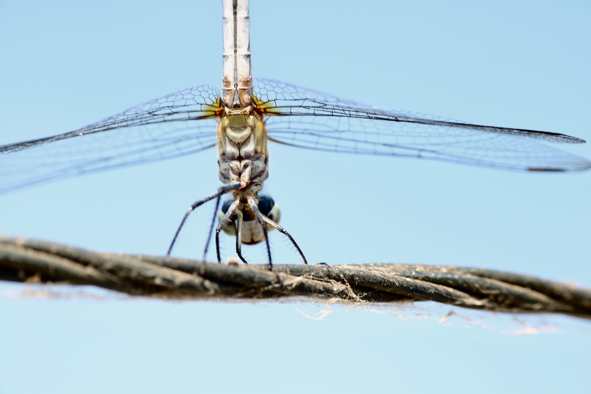 Dragonfly  by HighPerActive