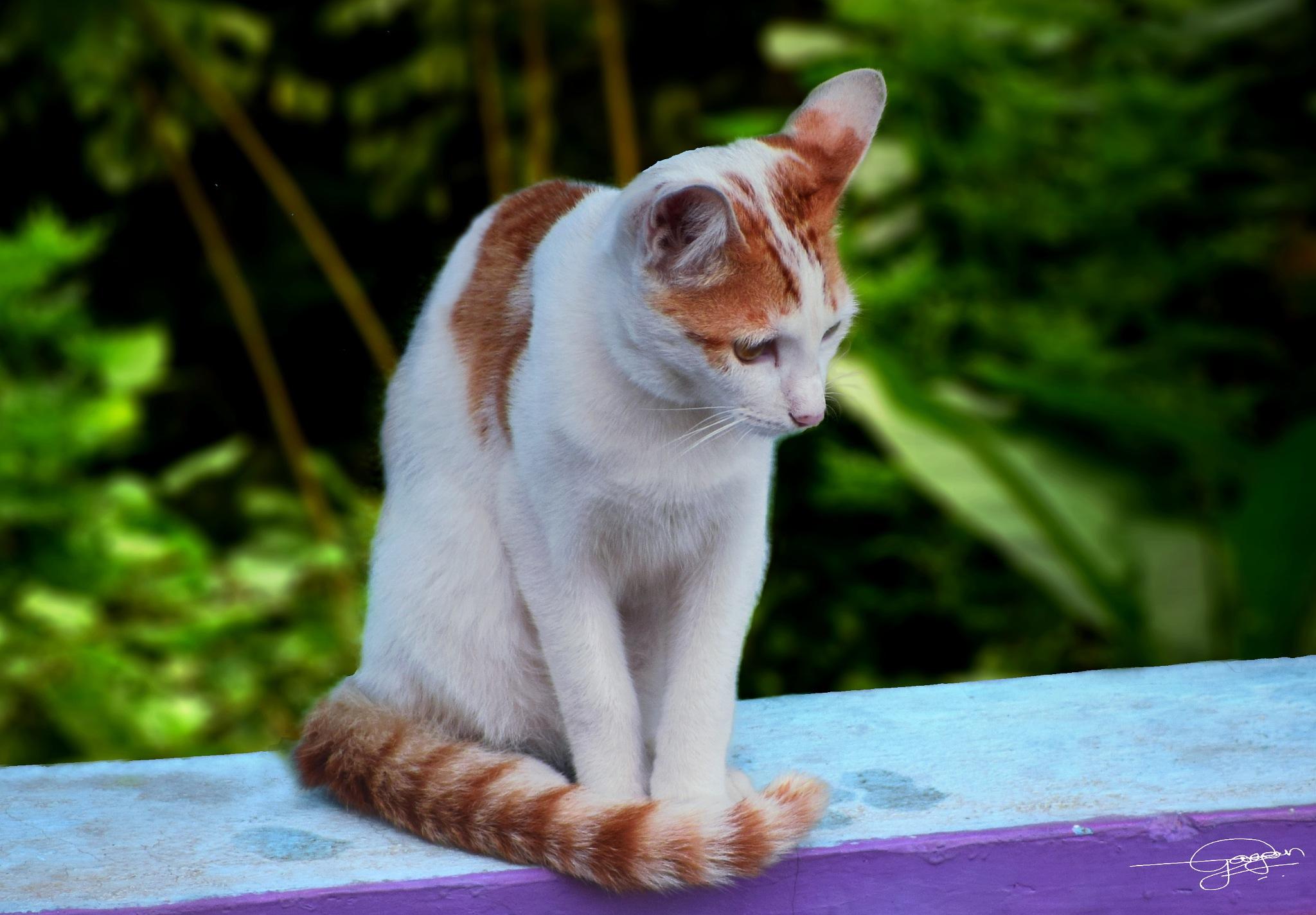 cat by Gagandeep k