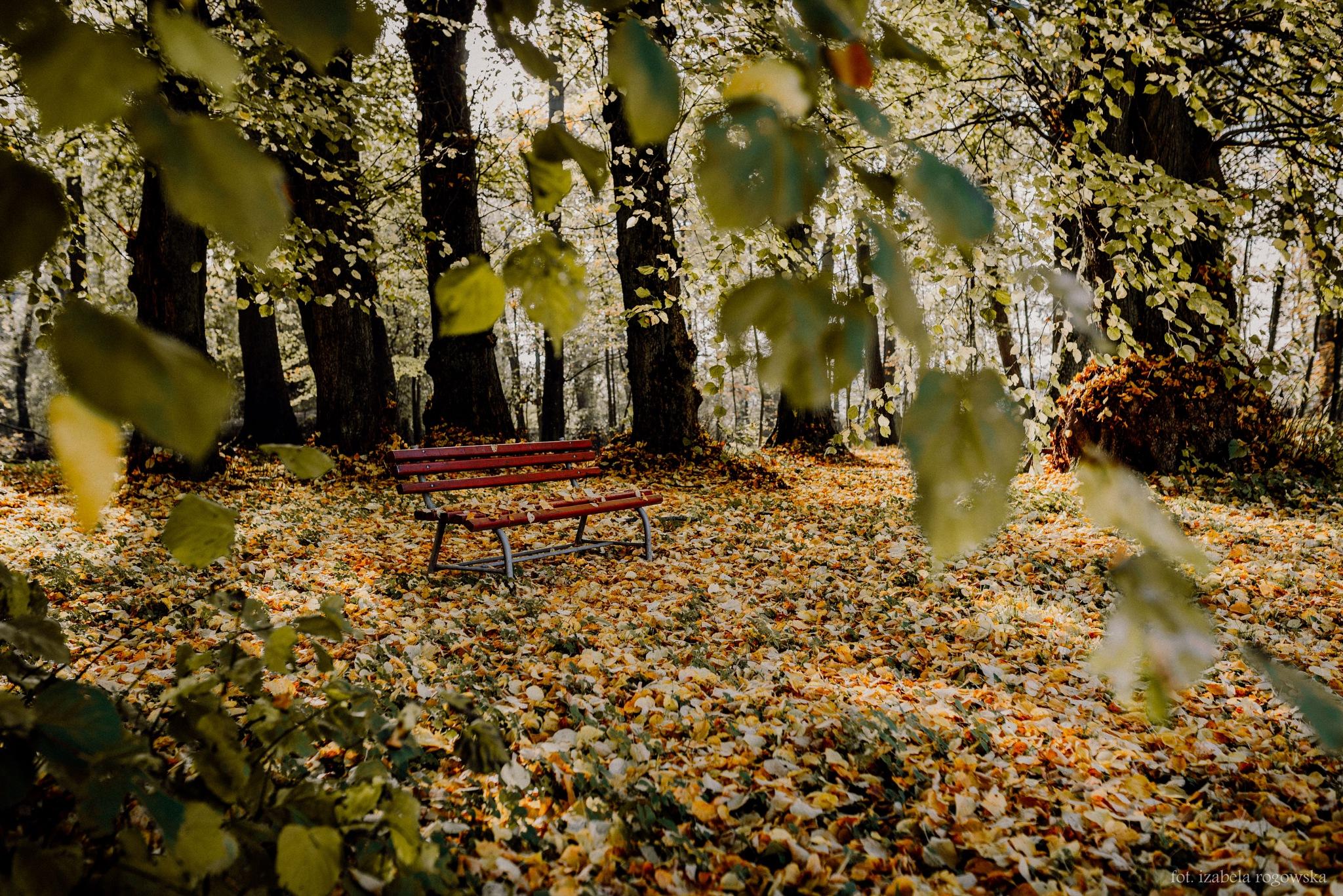 Autumn by Izabela Rogowska