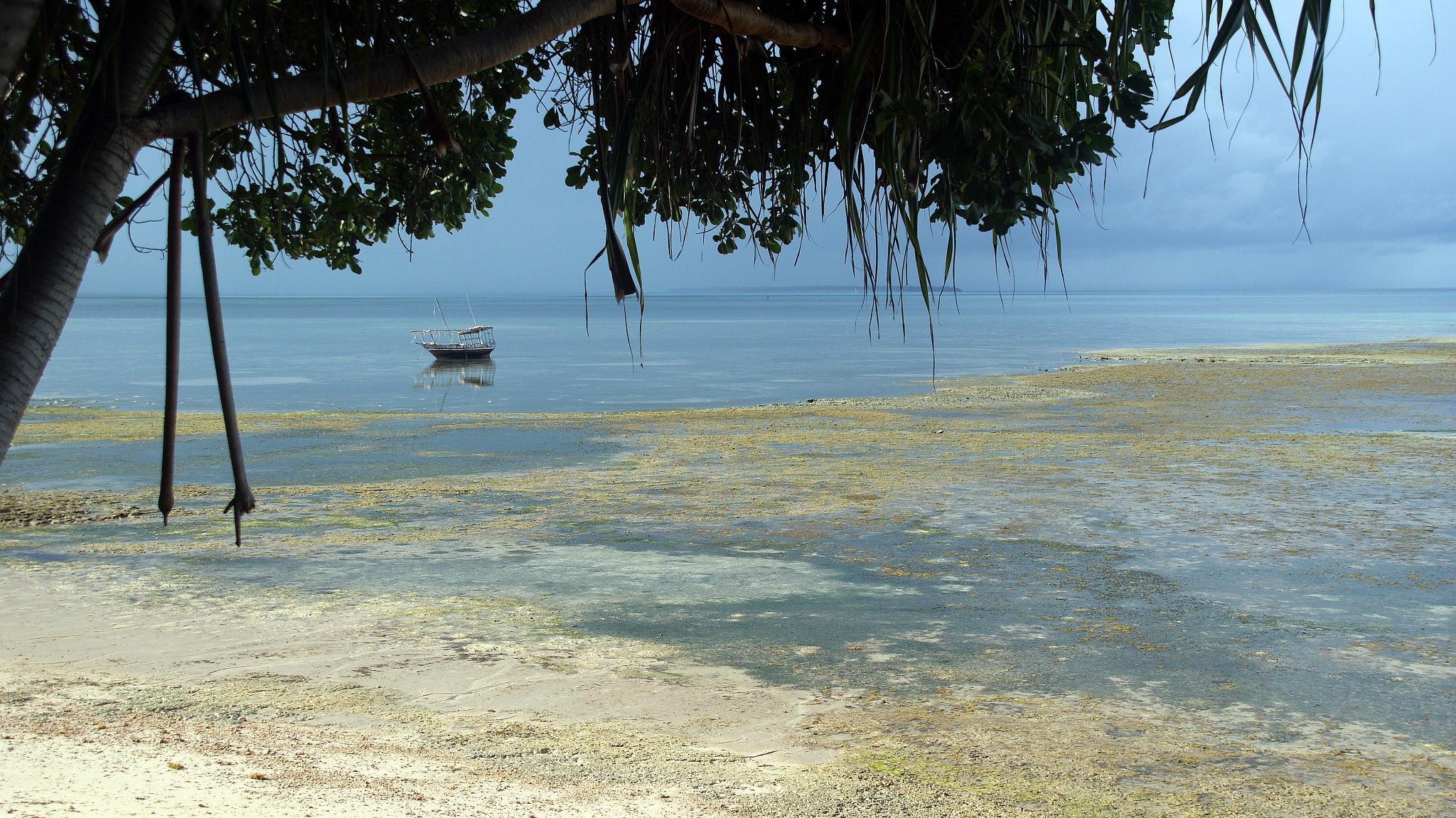 Zanzibar Fishery by Jeroen Hoogakker