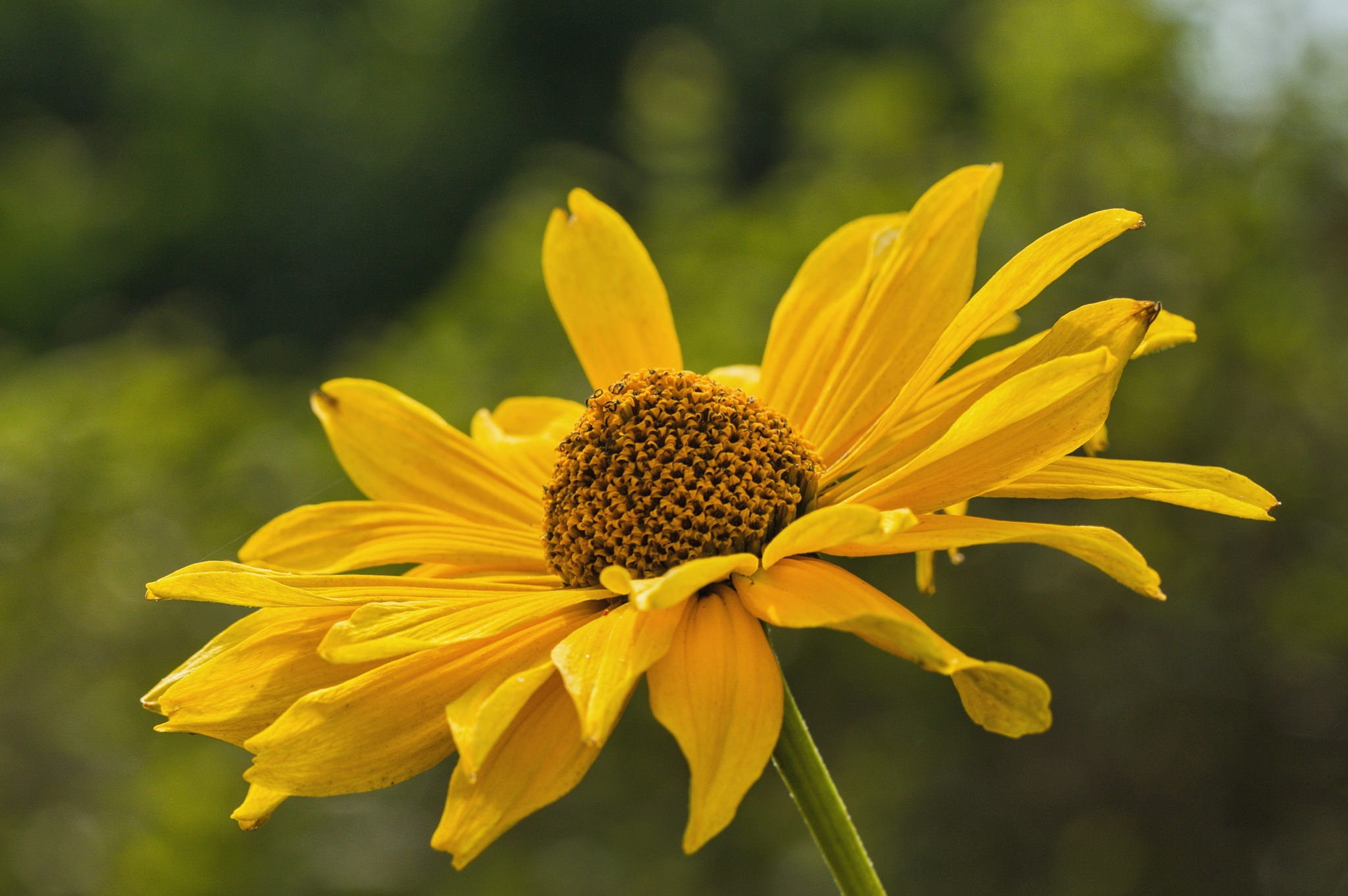 Flower by Kuba Šír