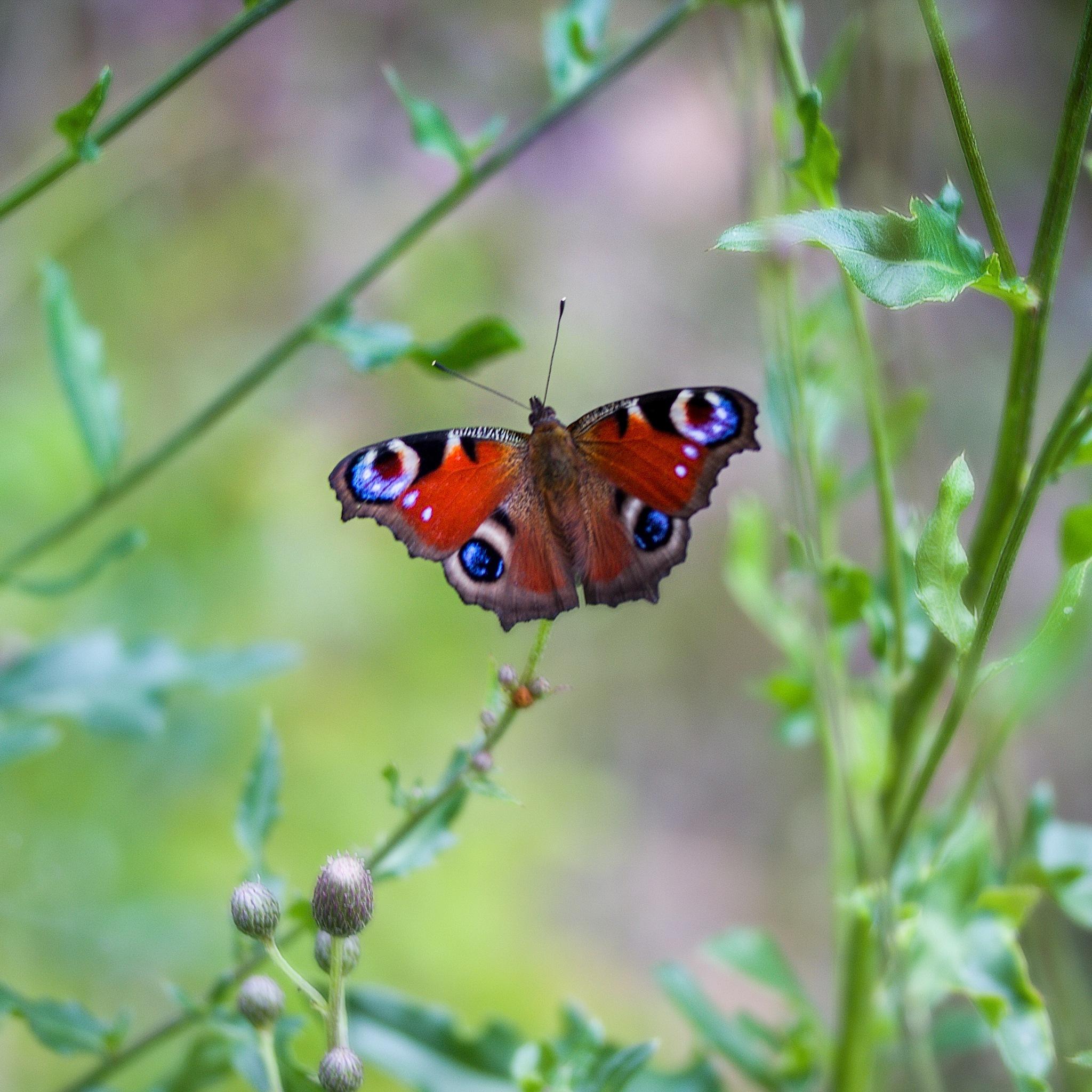 Butterfly by Kuba Šír