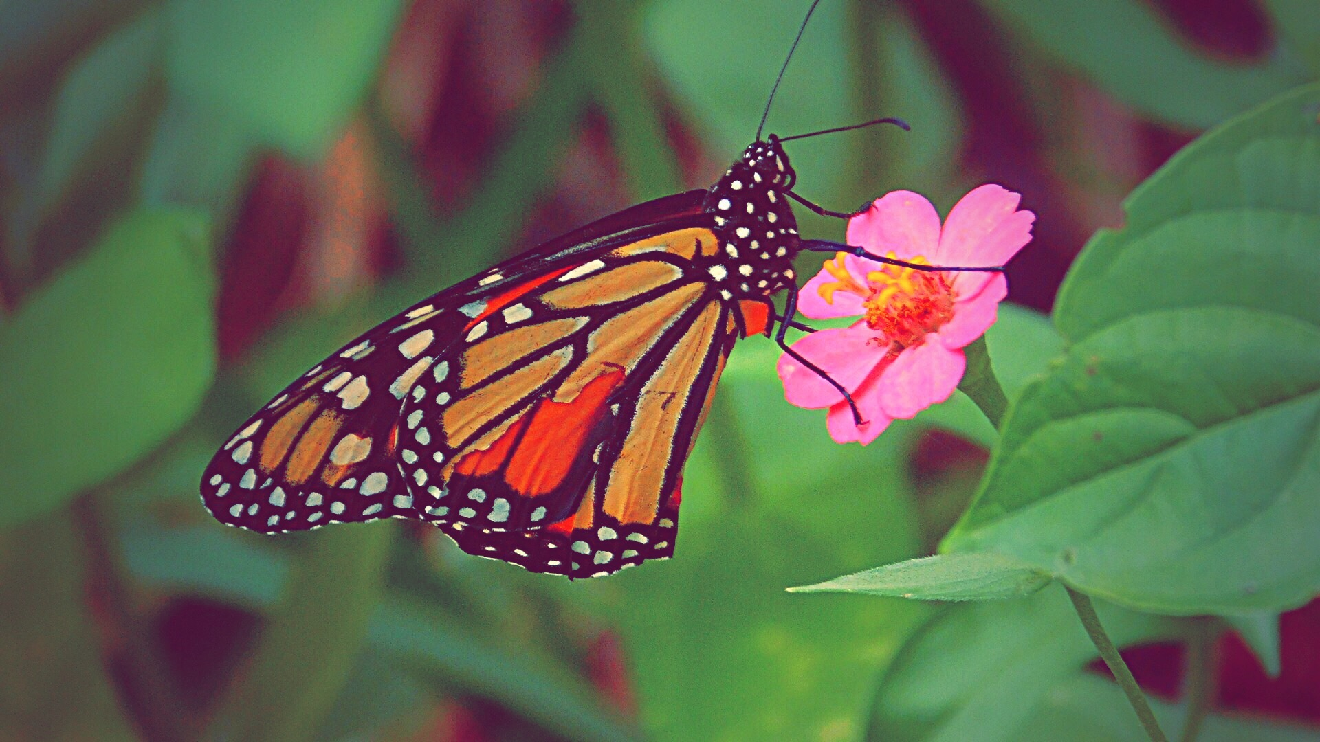Butterfly by eann61