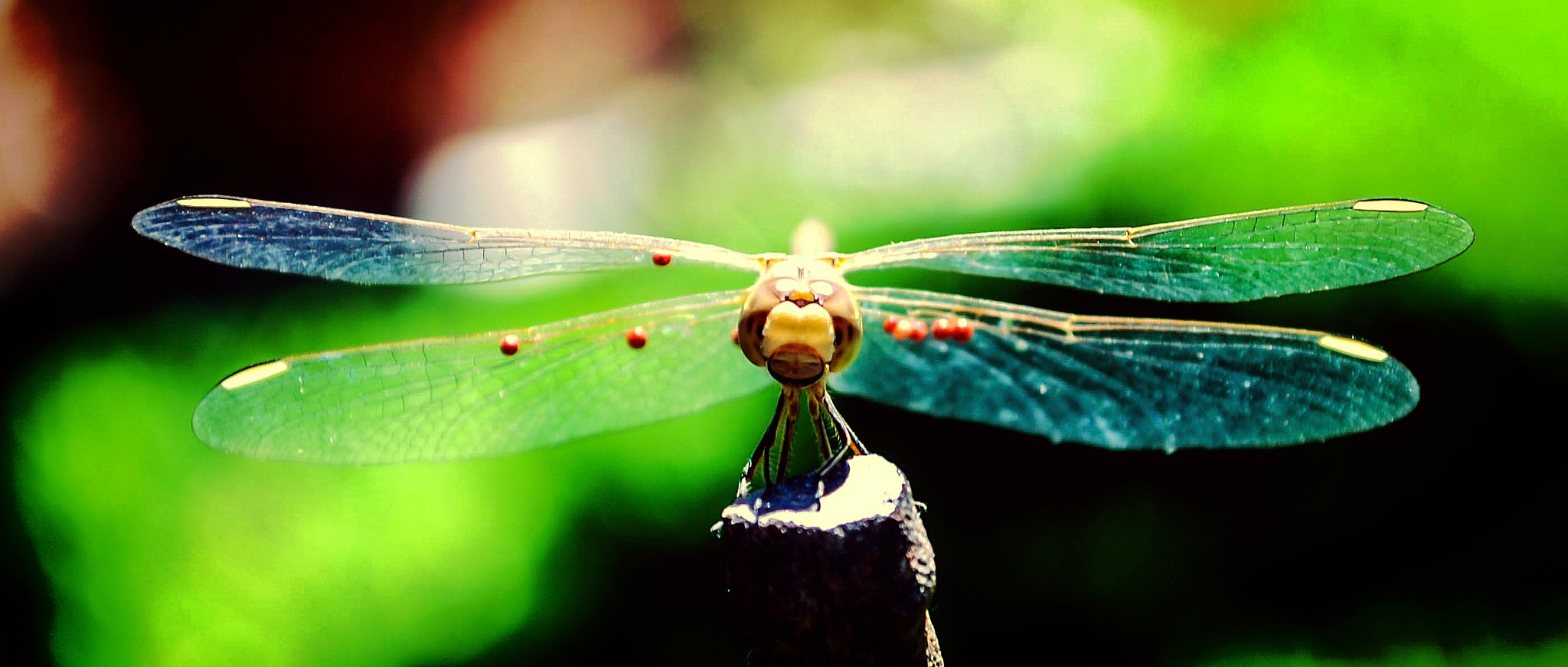 Dragonfly by Alvina S.