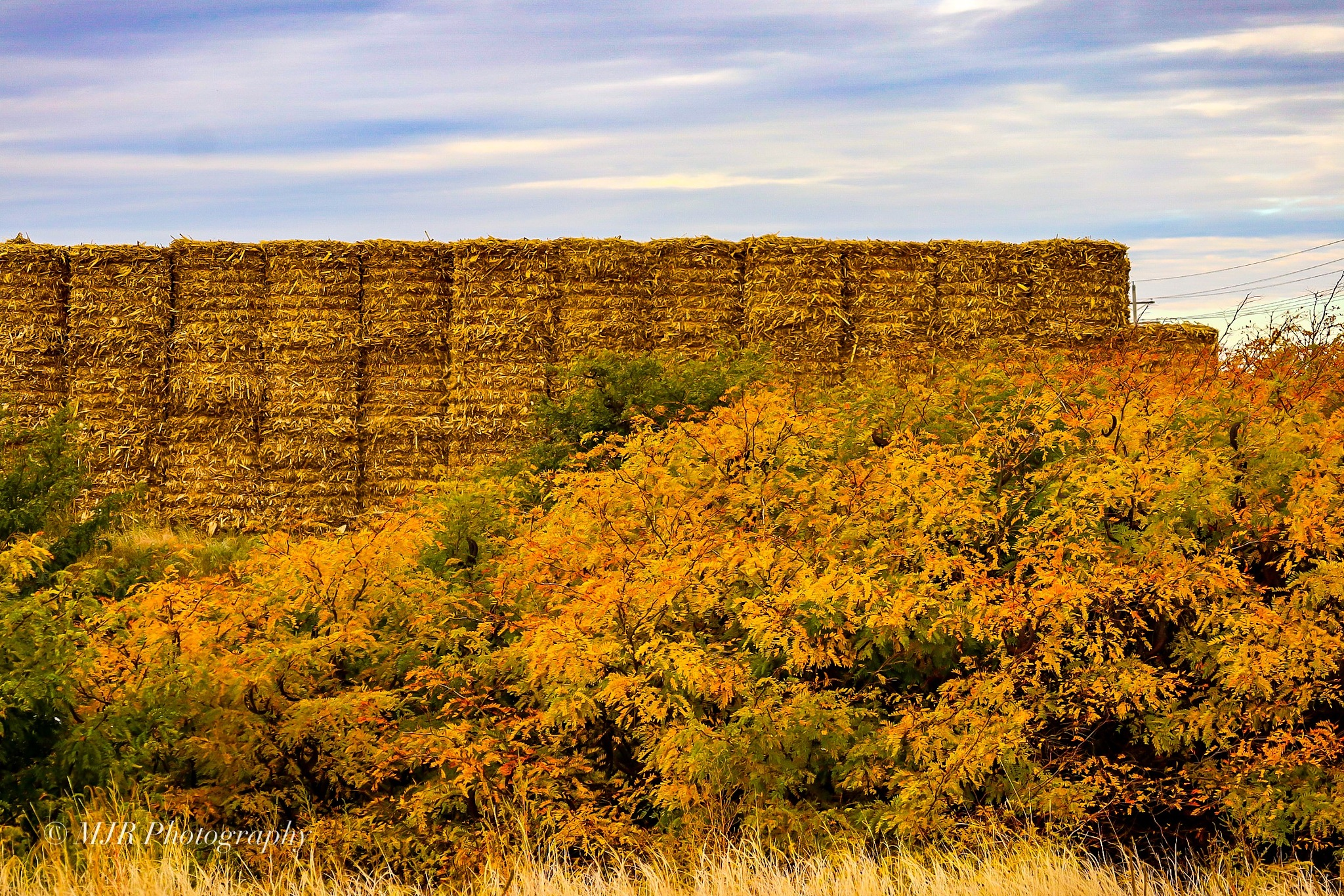 Signs of fall  by Mark Roberts