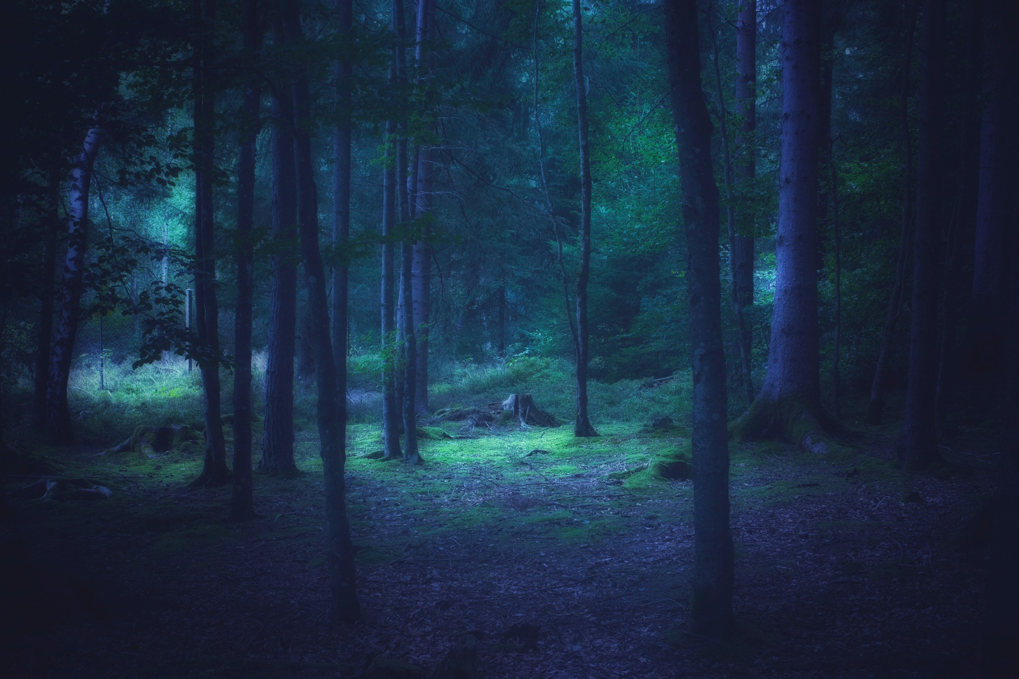 Moody Forest  by Denise S.