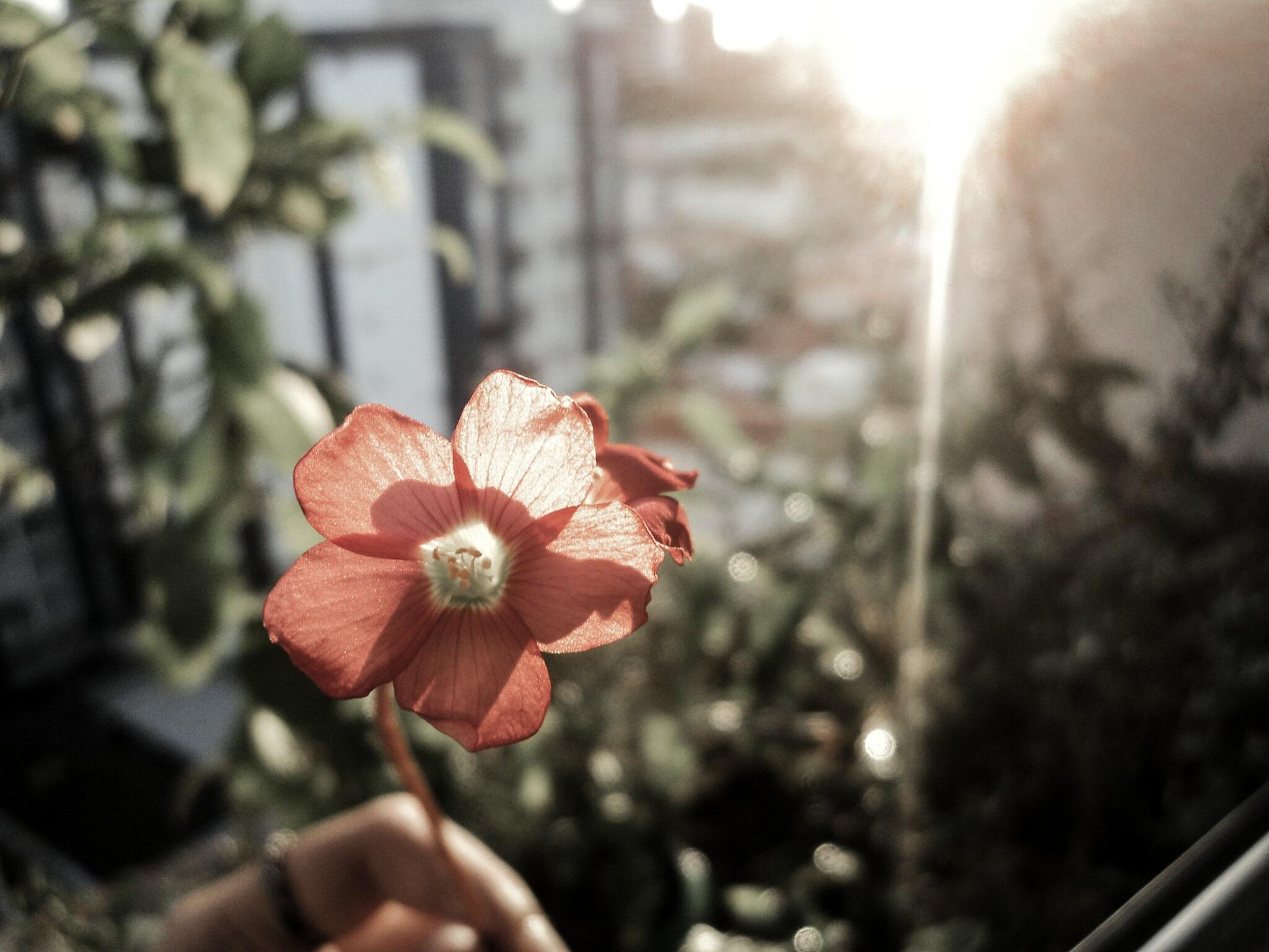 Clover Flower by Magiu_