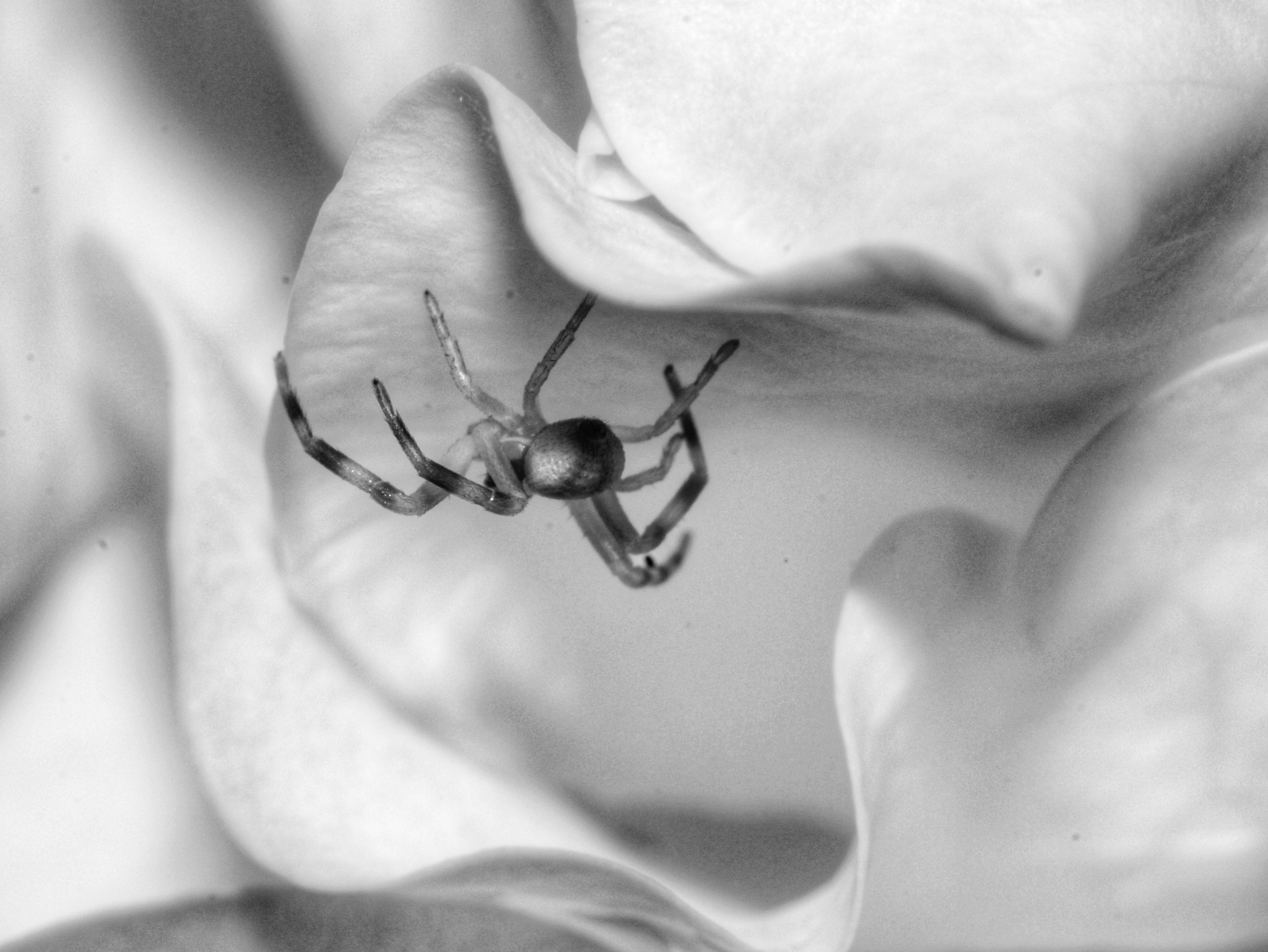black and white macro by Photo by Mat