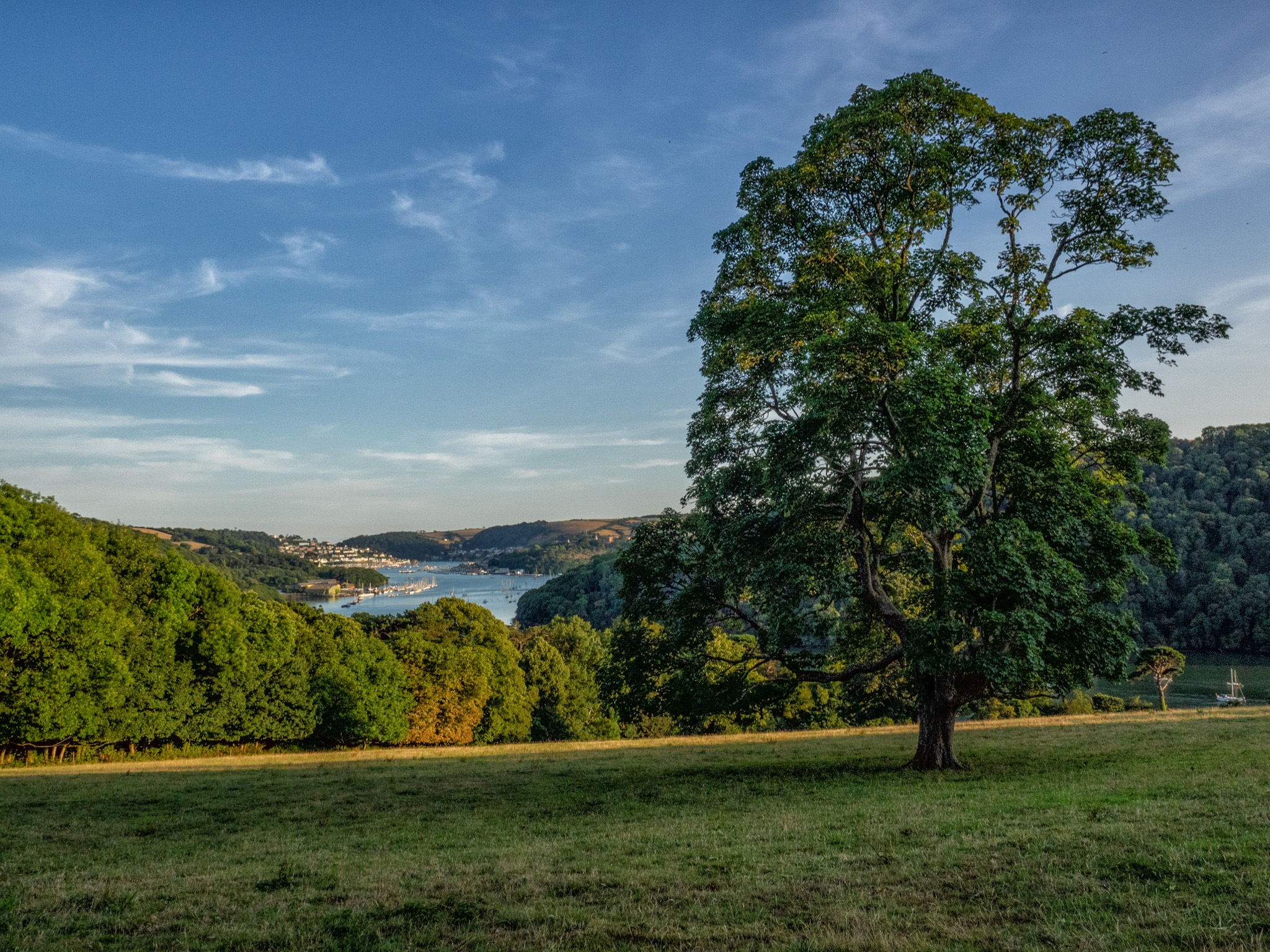 Tree Overlooking the River Dart by Pete Cripps