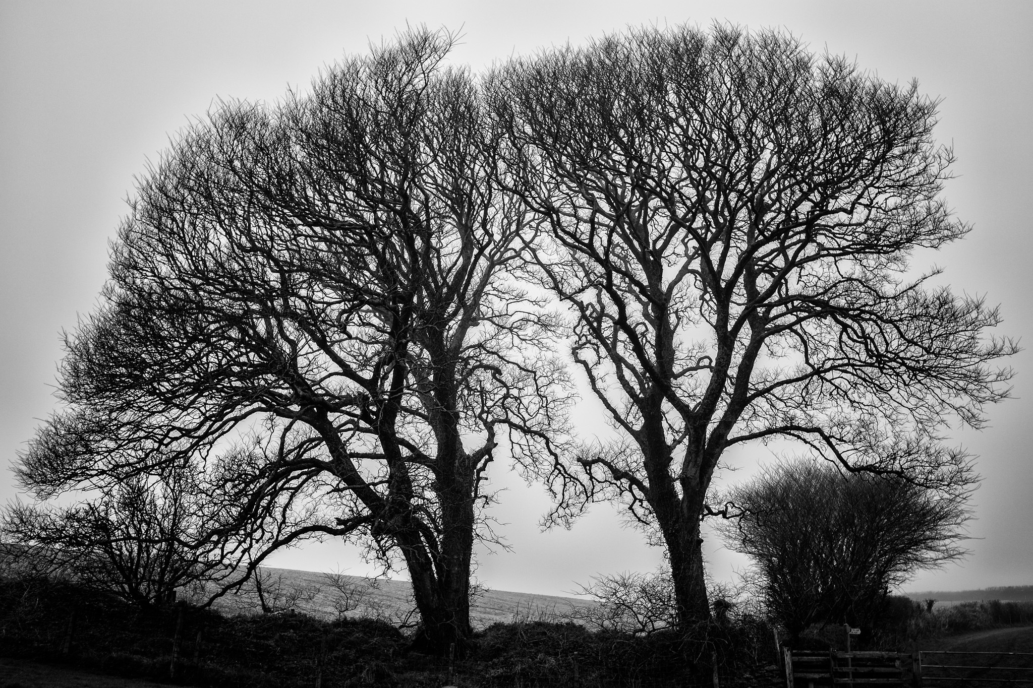 Trees in Black and White by Pete Cripps