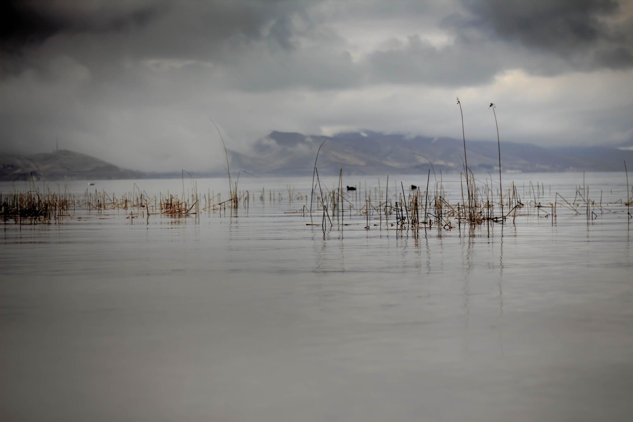 Reeds...  by C. Sinan Altundag