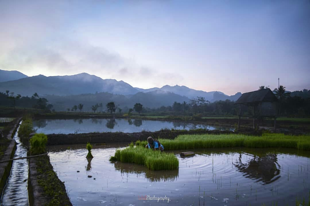 Good Morning Mr. Farmer by Wall Masry-q