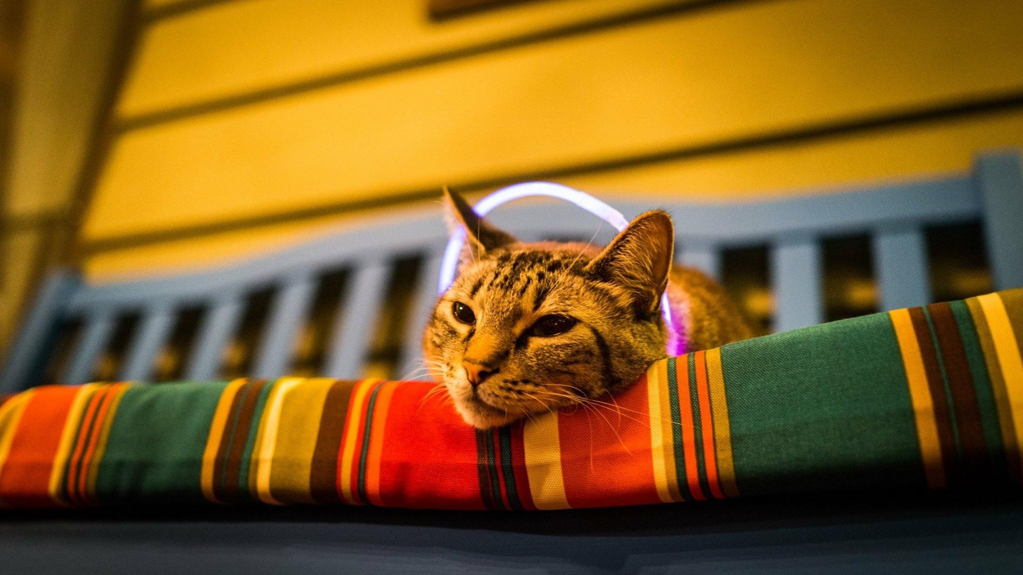 Halo cat.  by Daniel Alderson