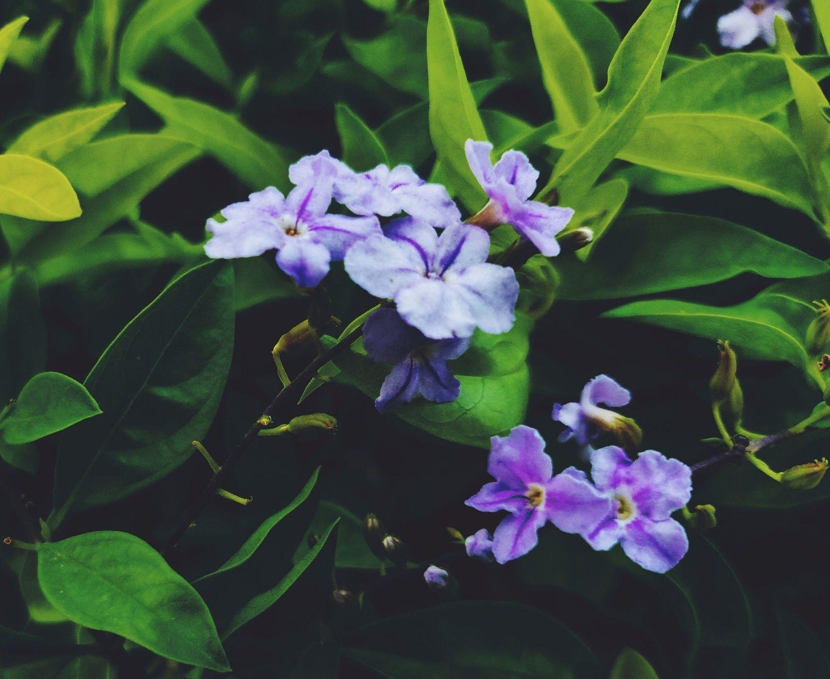 violet flowers by Nitesh Mishra