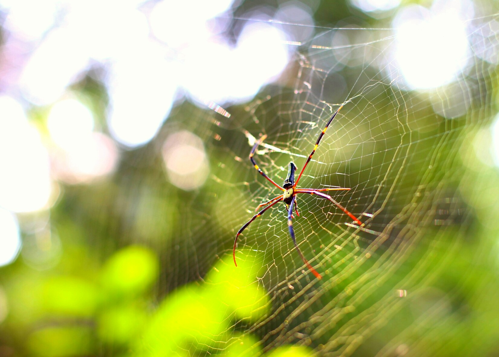 Arachnophobia  by abhitrups2002