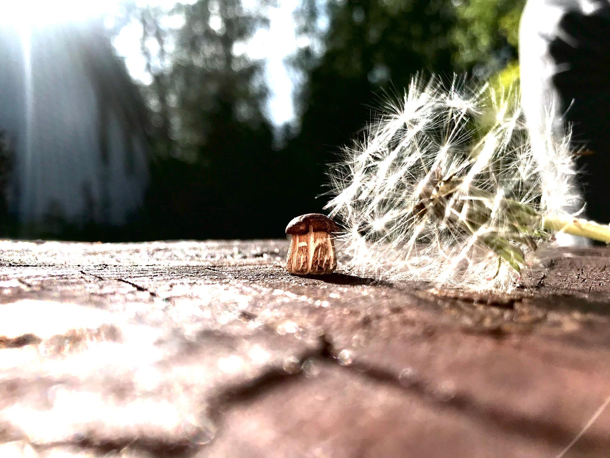 Little mushroom by Dominyka