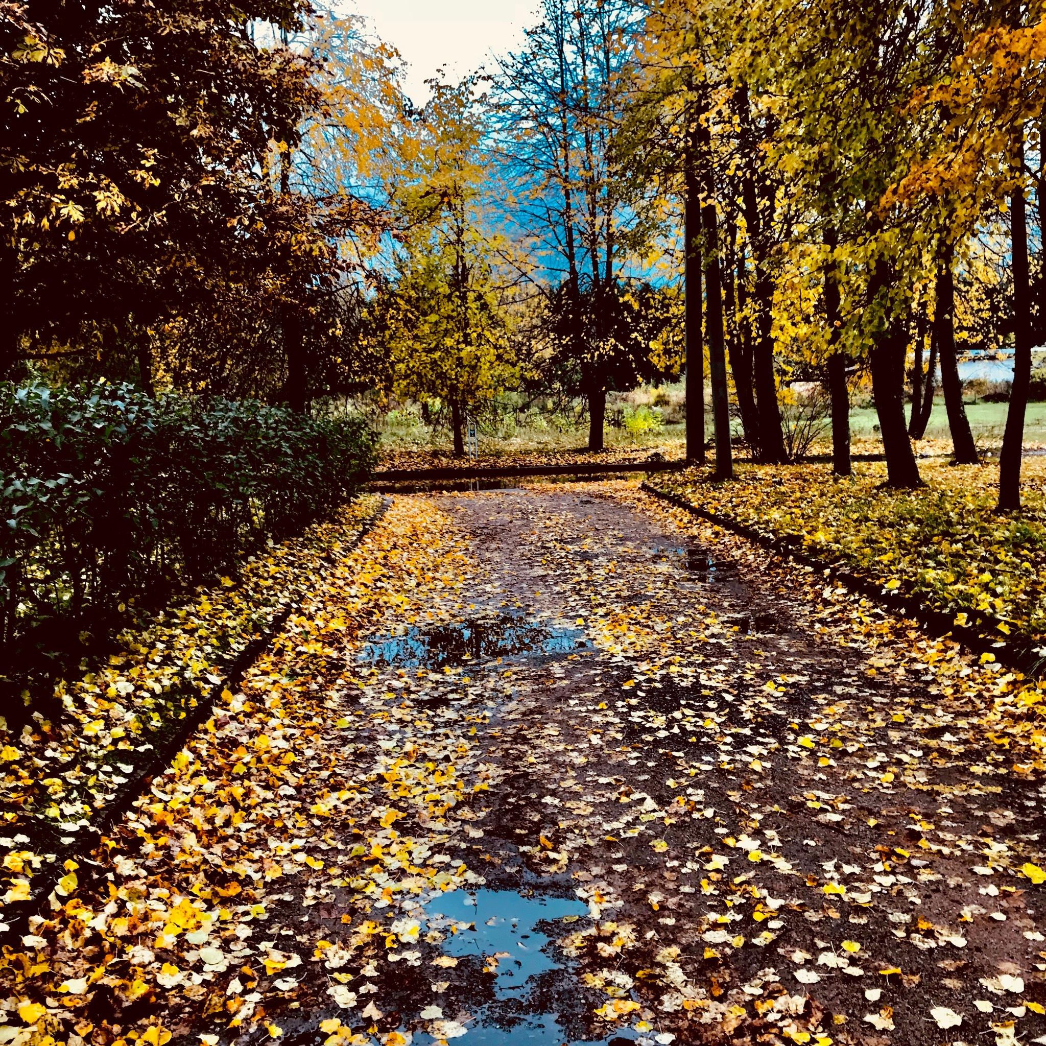 Autumn by Dominyka
