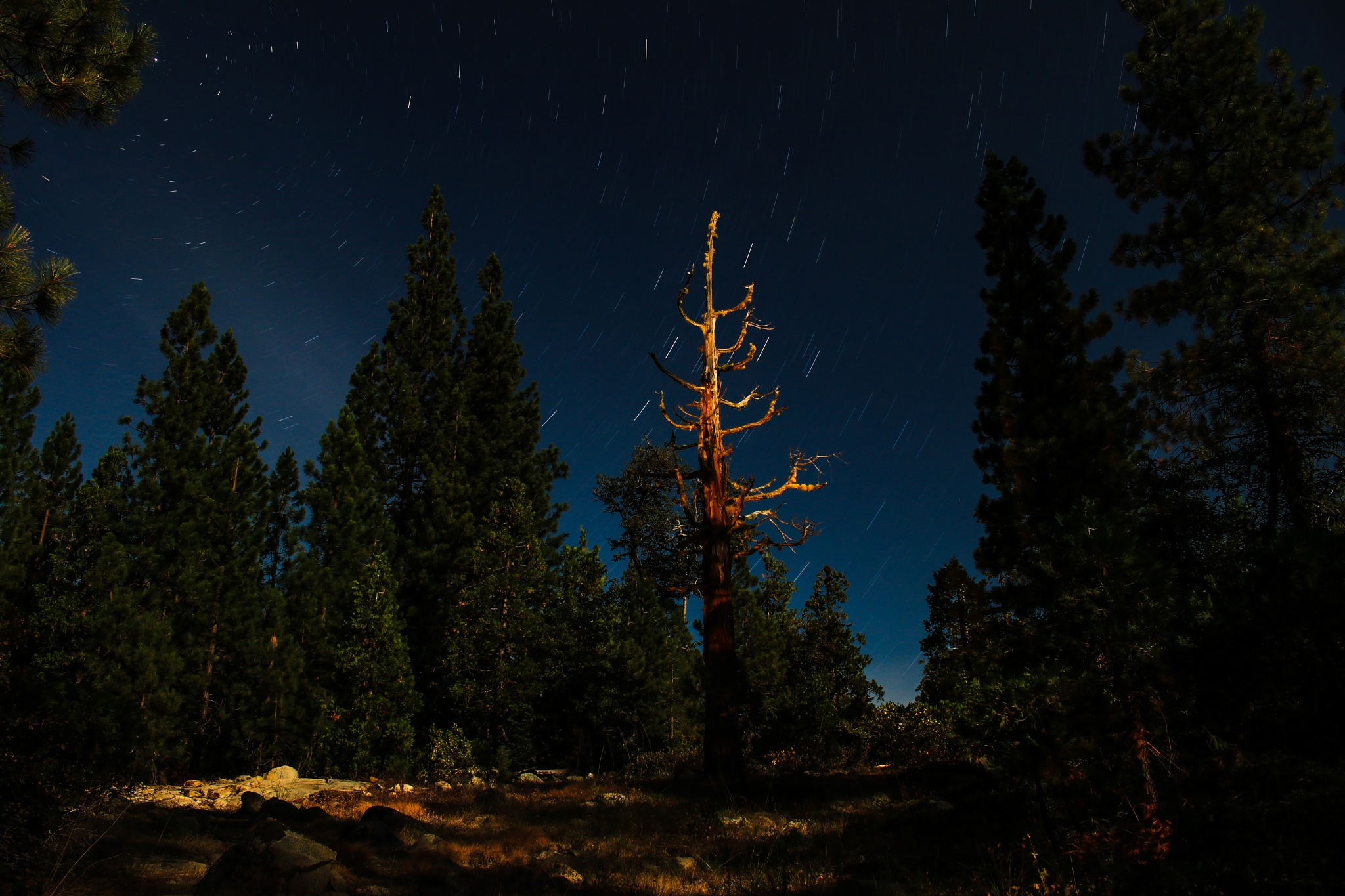 Lonely cedar by kendallhoopes