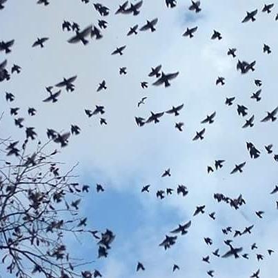 """""""The Birds"""" by Yeliz Senyerli"""