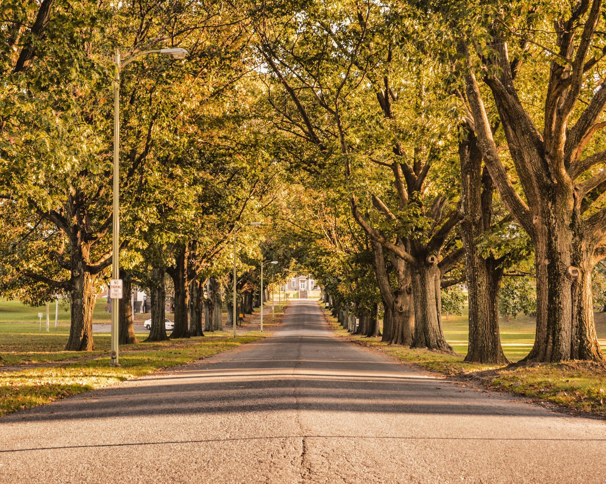 The Path by Fernando Sayavedra