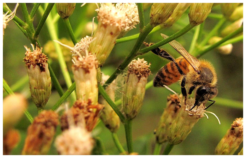 Bee - Abeja by Fabián Martínez