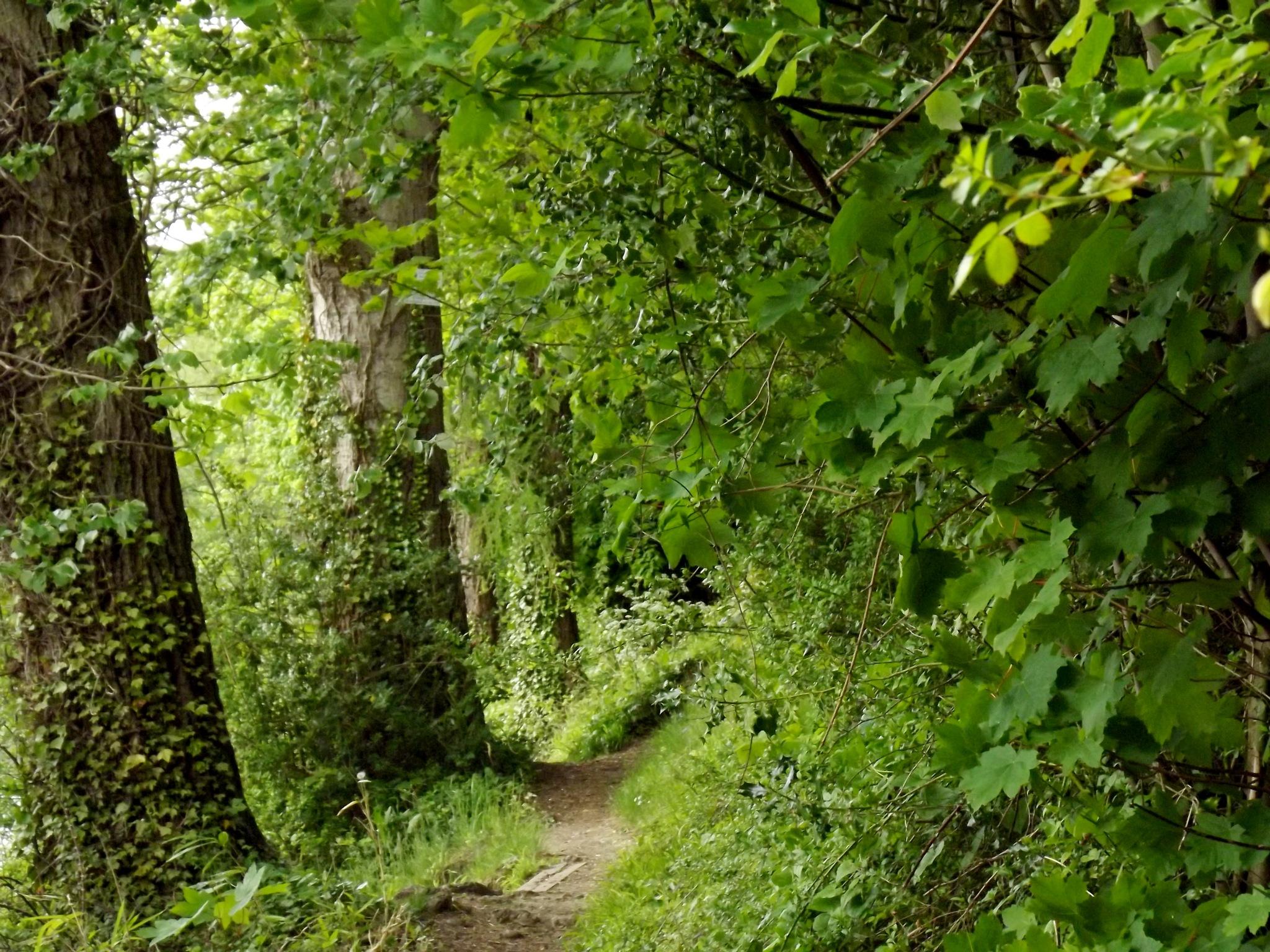 Little Path by Gordon