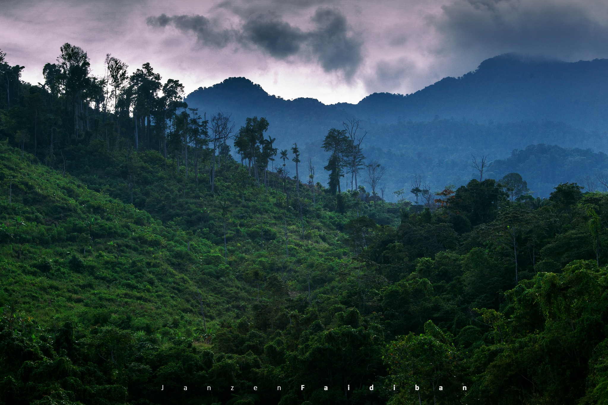 Tropical Forest of New Guinea Island by Janzen Faidiban
