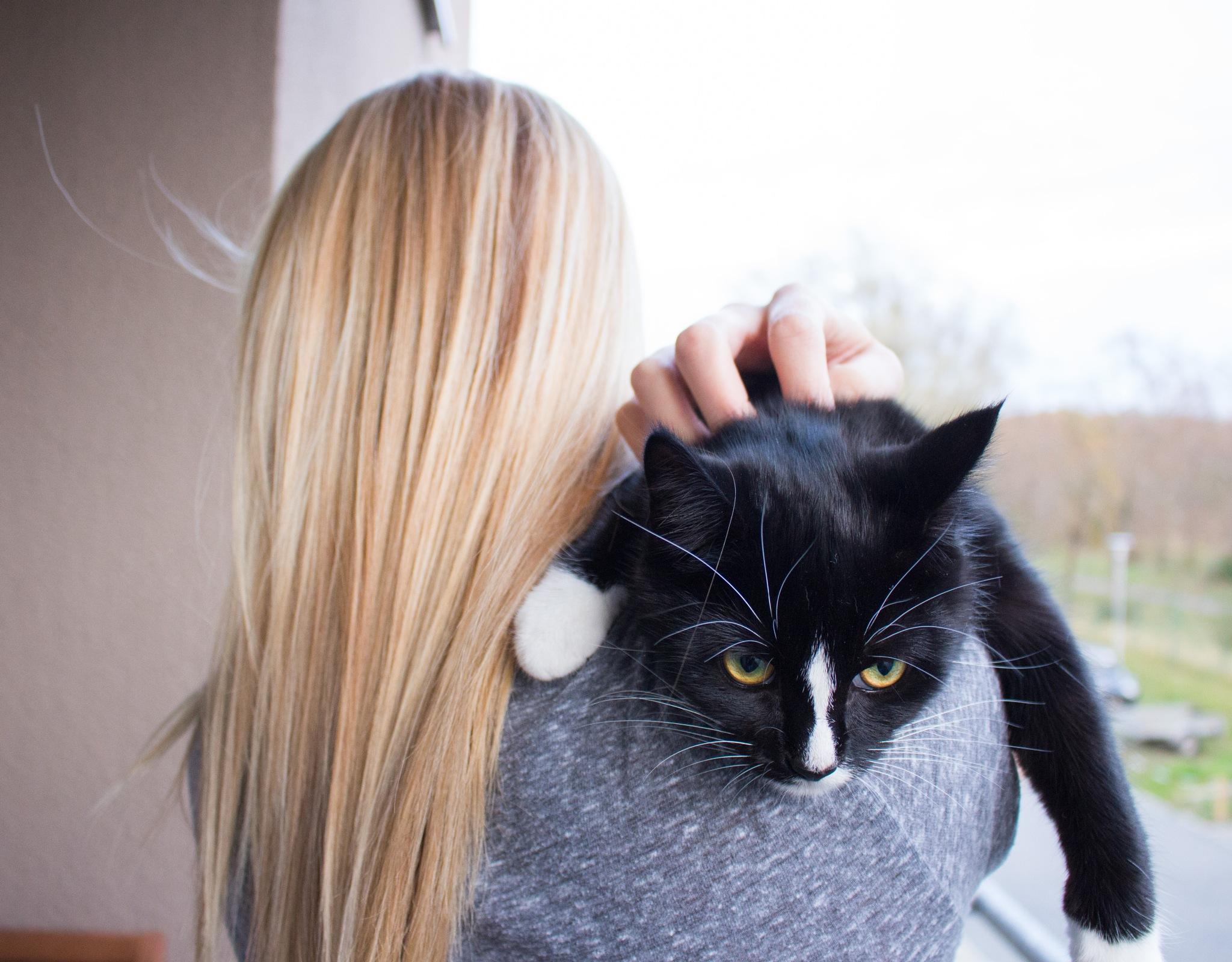 Curiosity Cat  by Henrik S.