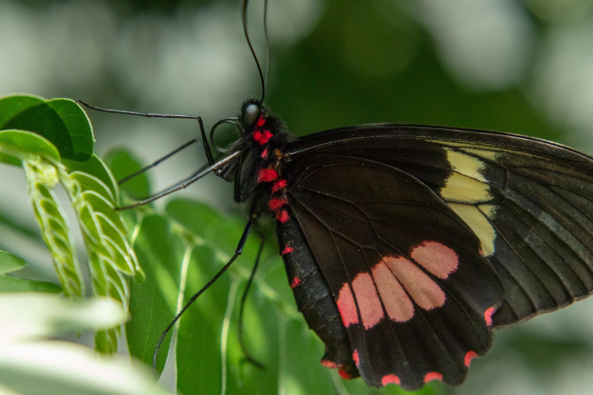 Butterfly by brentjohnphillips