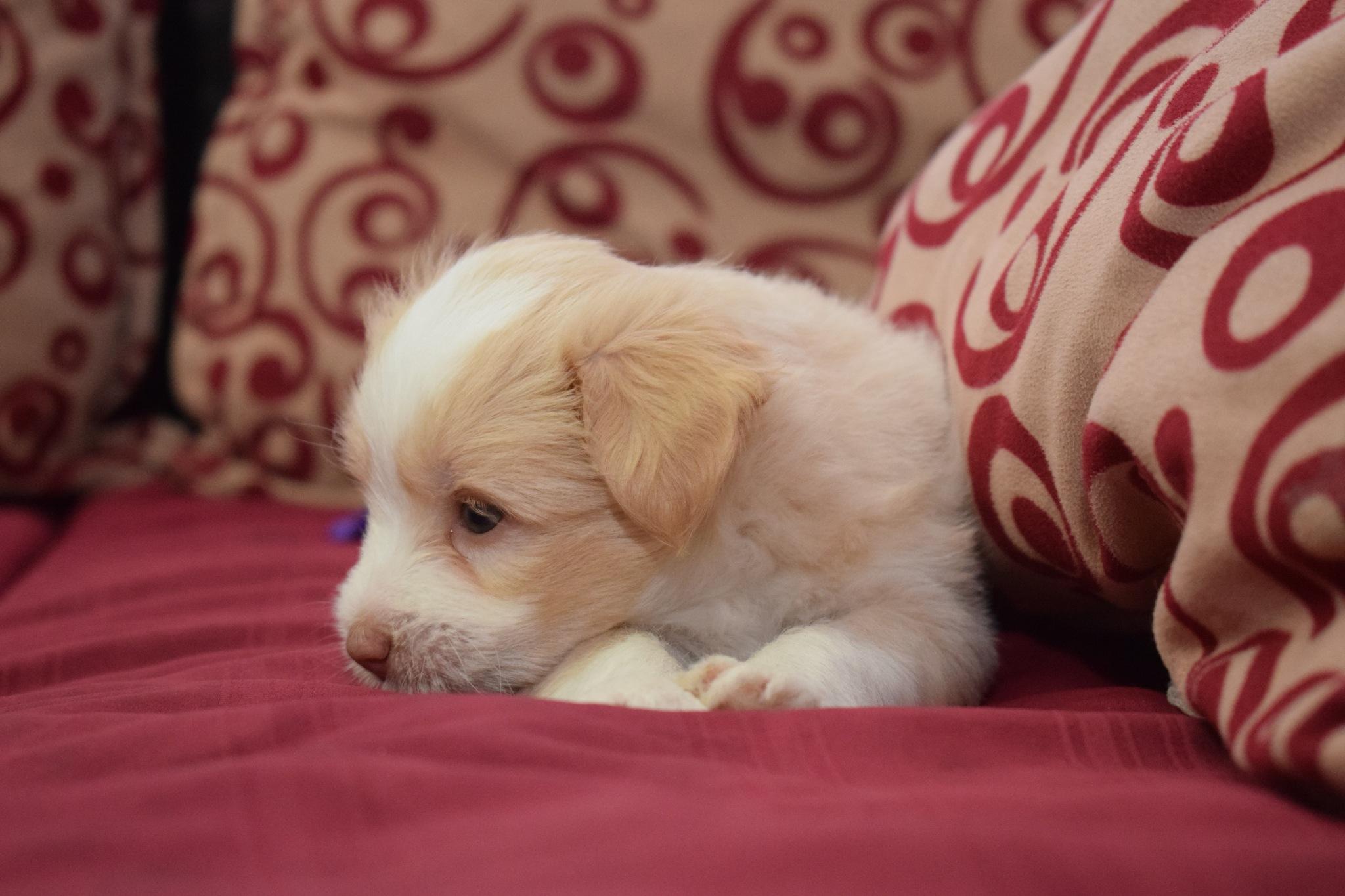 A sad little dog by Mohamed Hamed