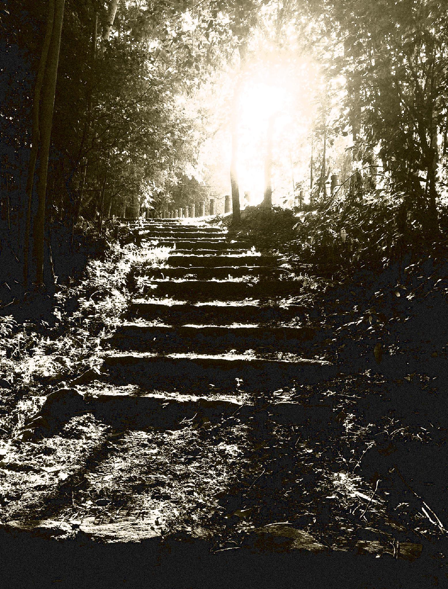Photo in Black and White #light #sun #shadow #black and white #steps