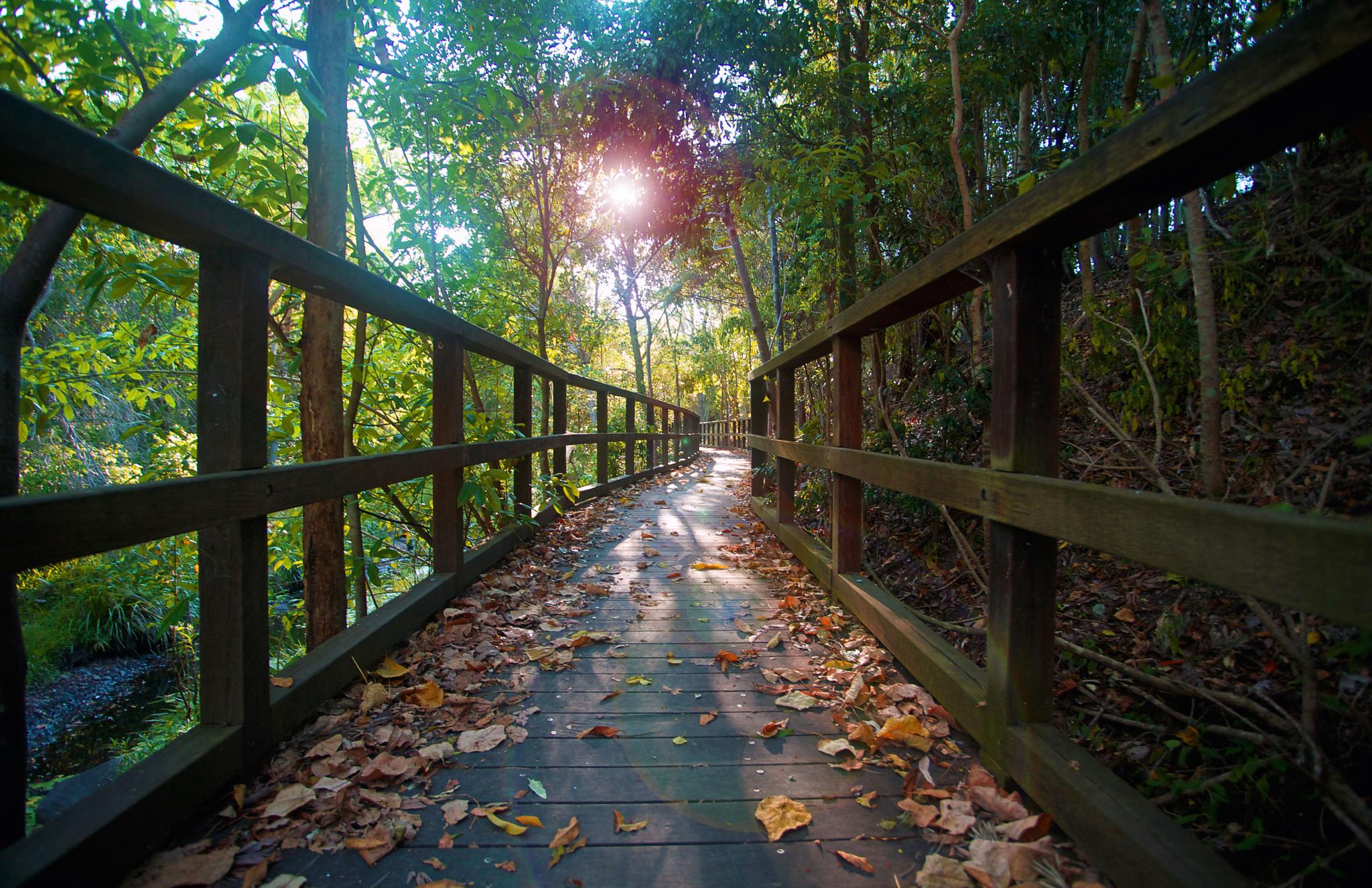 Photo in Nature #sunset #forest #boardwalk #trees #light