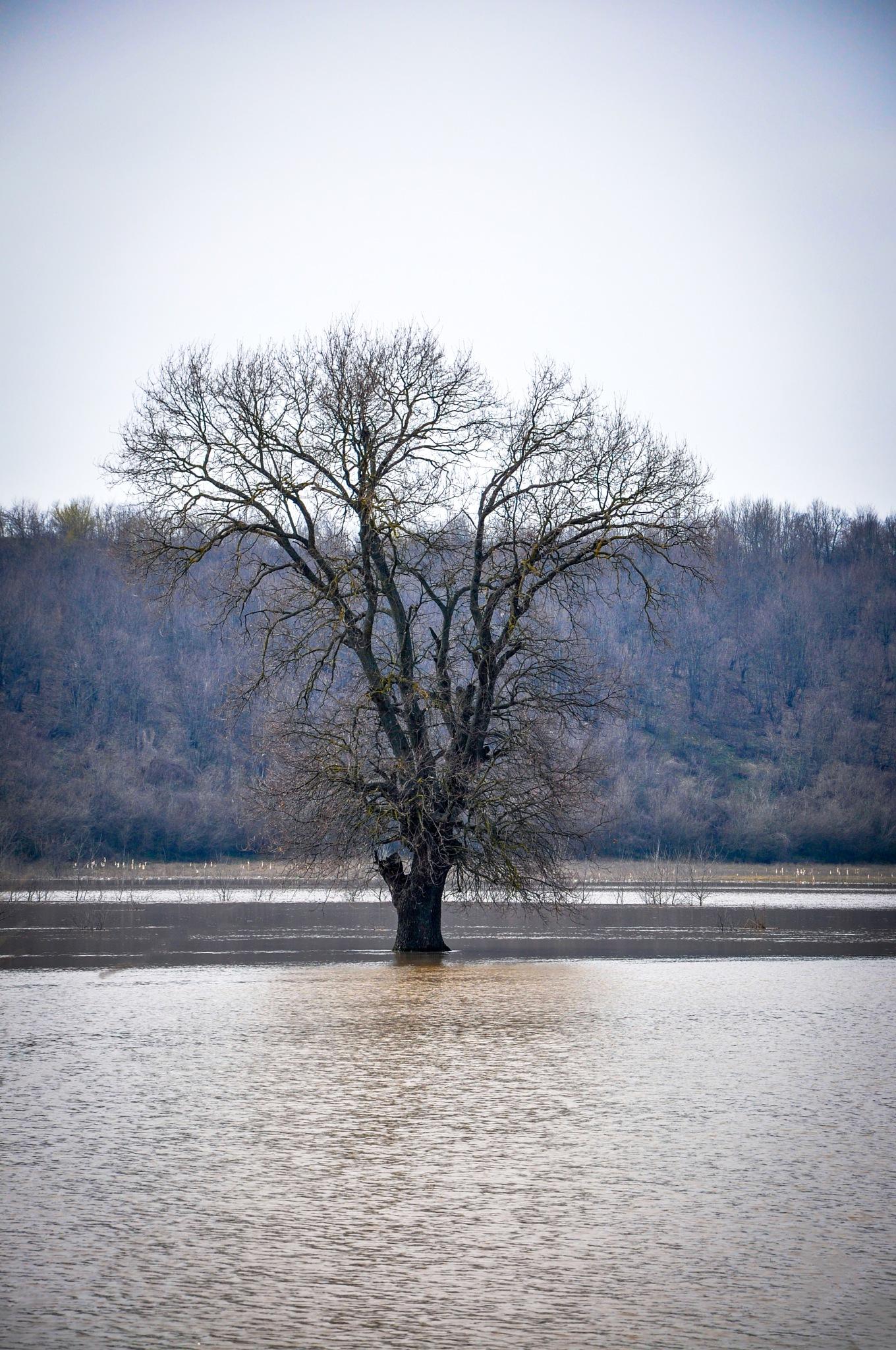 Flooded tree by Georgi Ivanov
