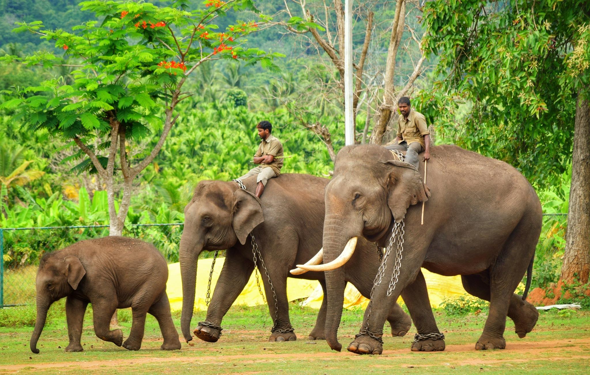 Elephant Family. by pratham7721
