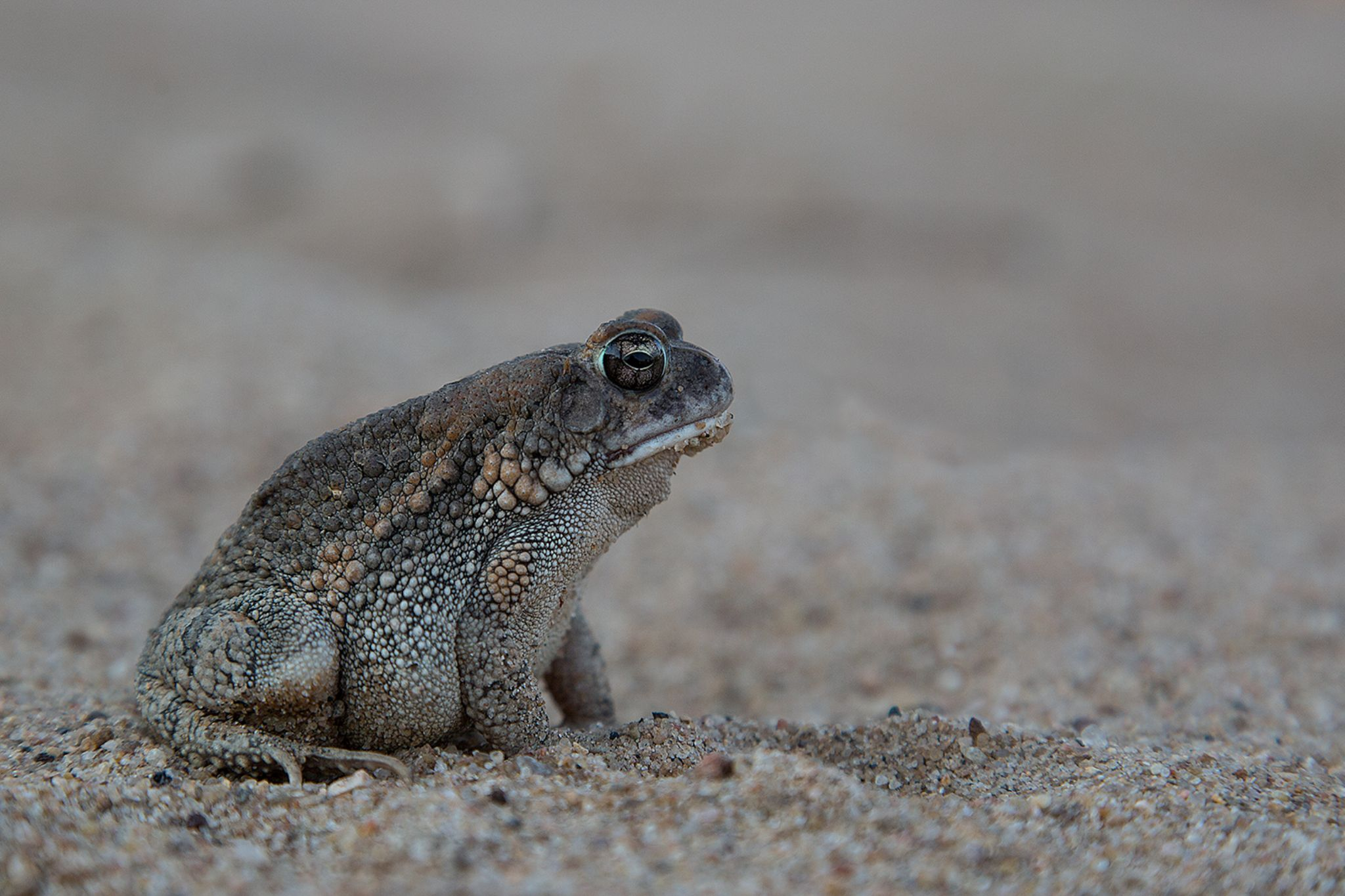 Toad II by Ed Peeters Photography