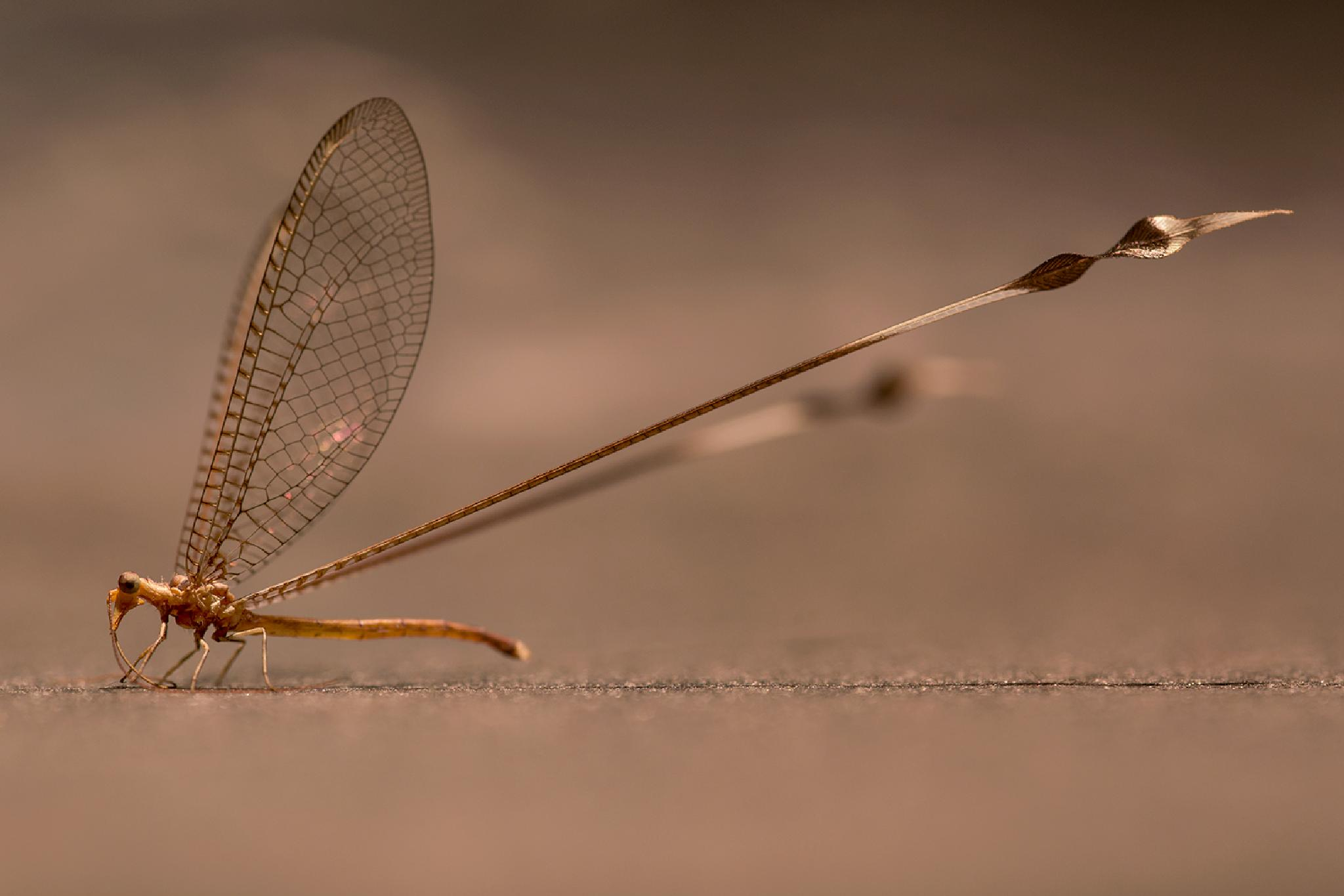 Dragonfly by Ed Peeters Photography
