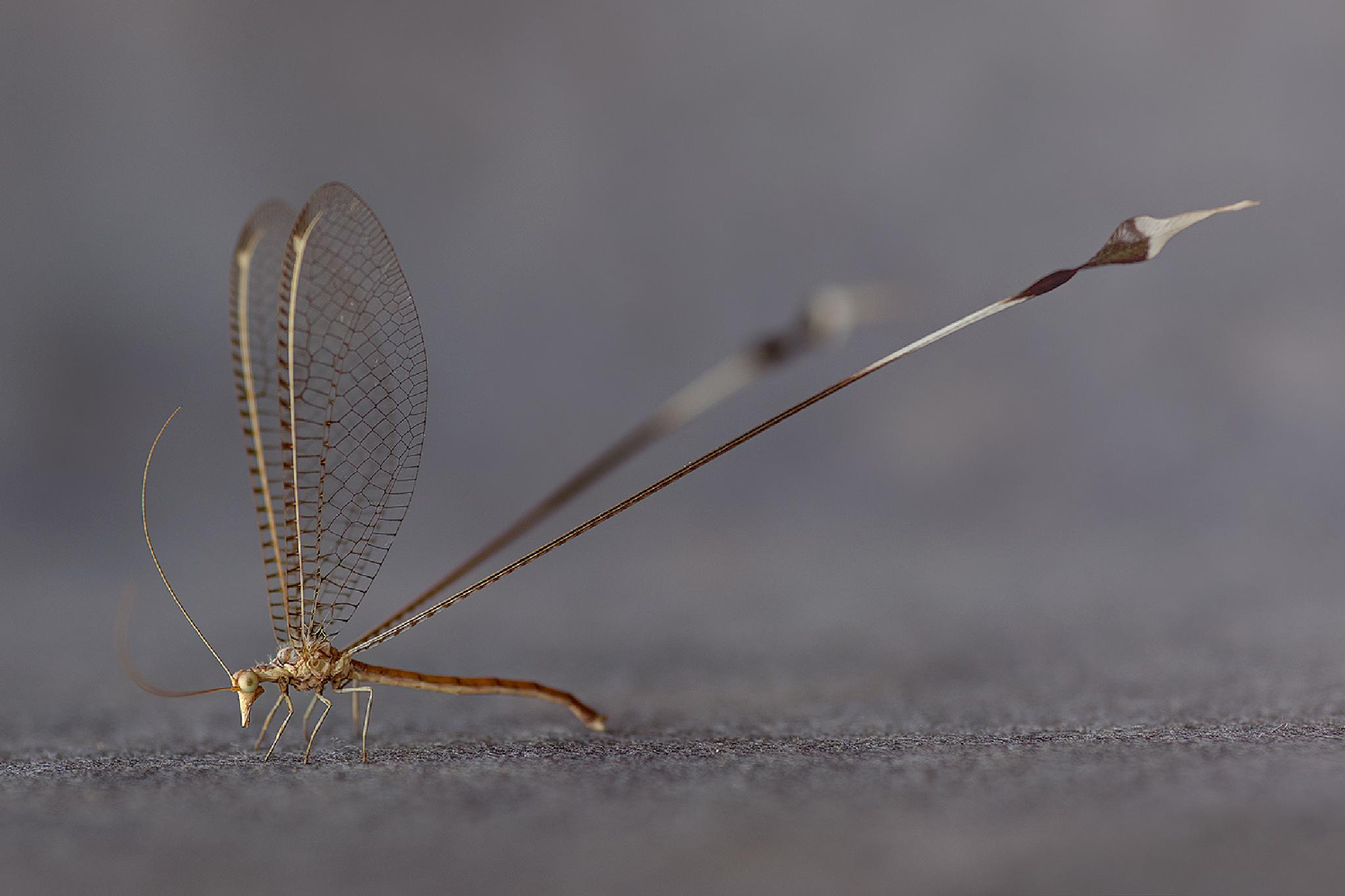 Photo in Macro #dragonfly #malawi #africa #ed peeters photography