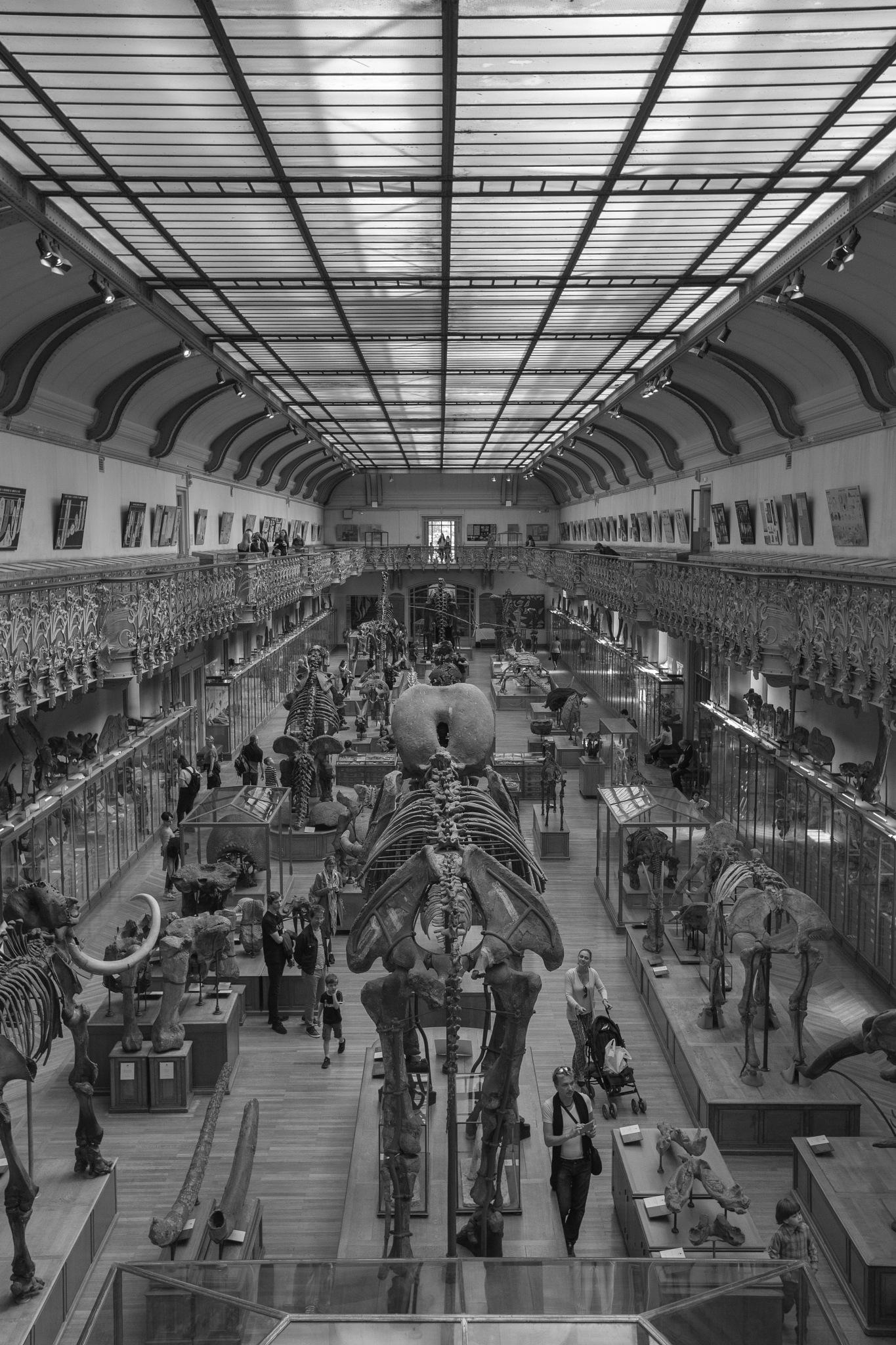 Muséum by Trystan Furia