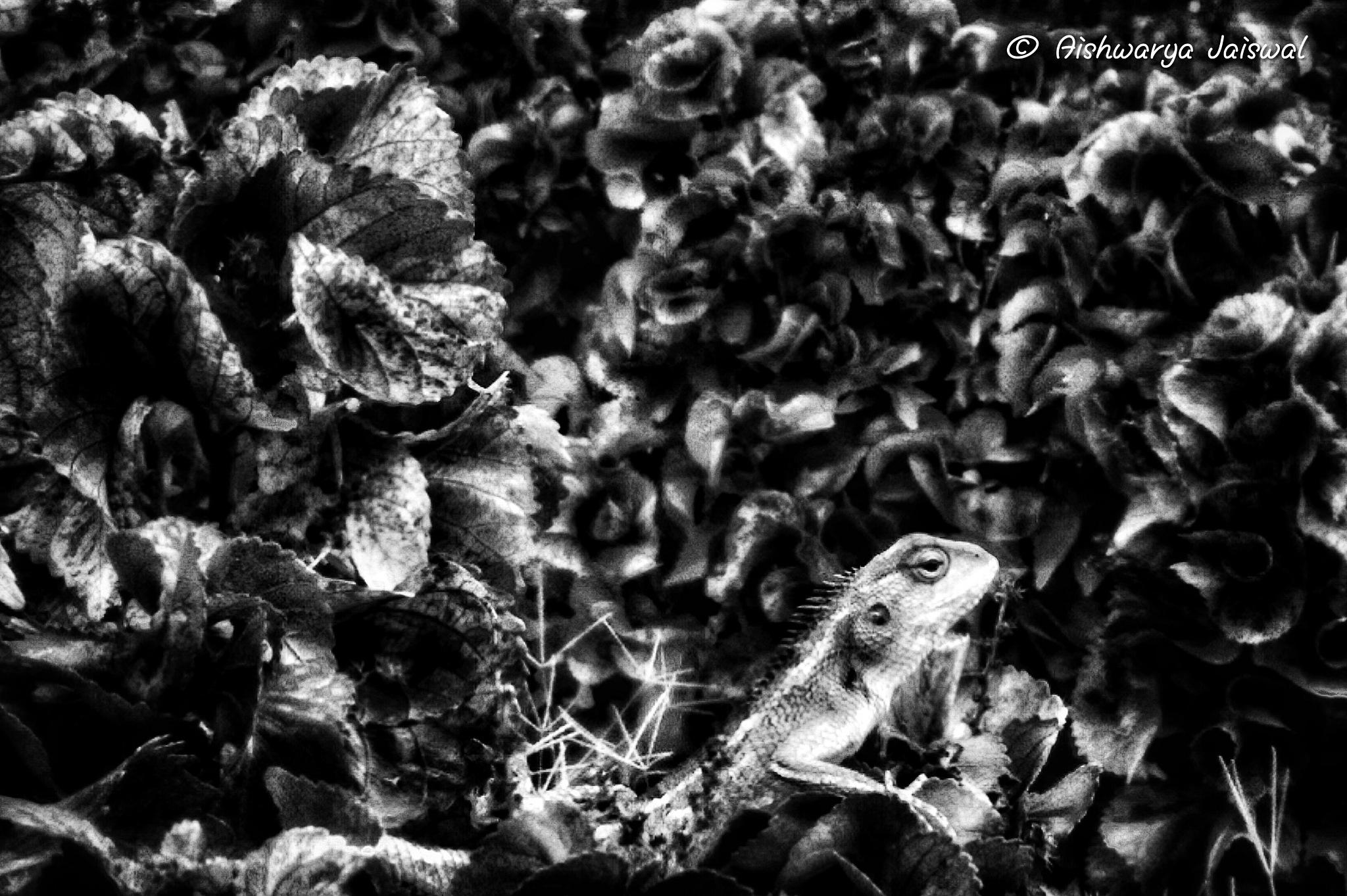 chameleon by aishwarya jaiswal